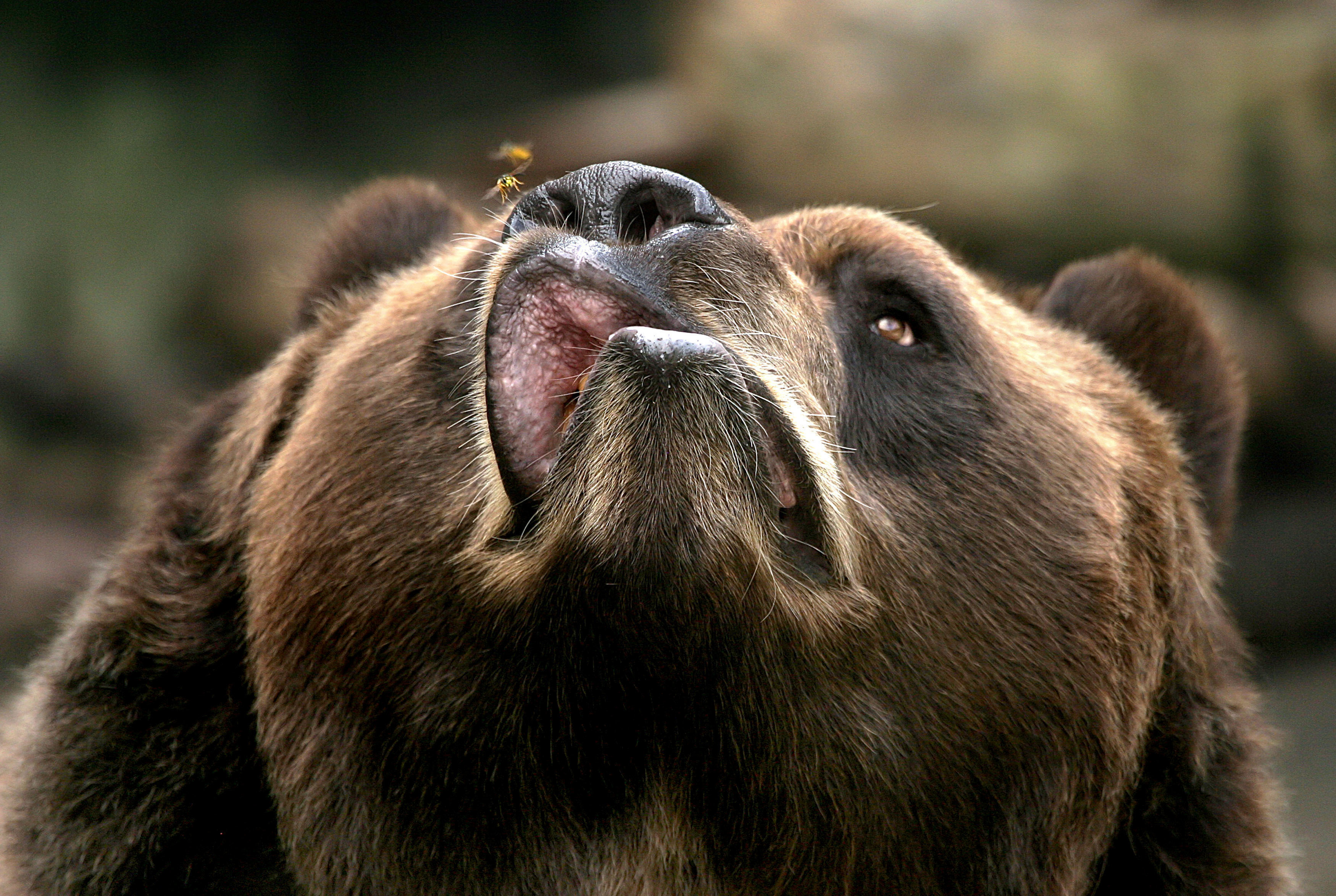 Картинки с медведями смешные