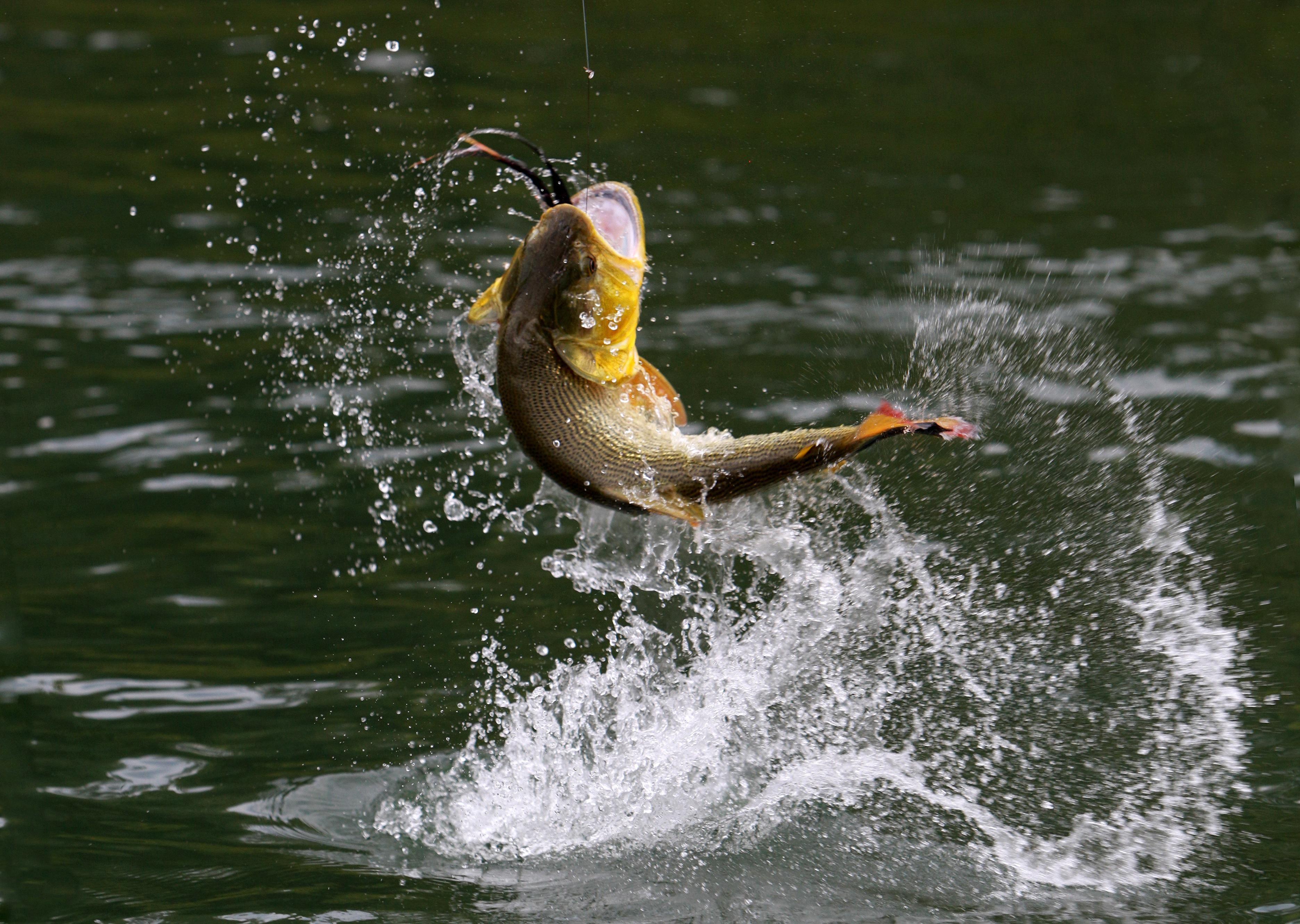 неудивительно, картинки про рыбалку на рабочий стол менее потолочное