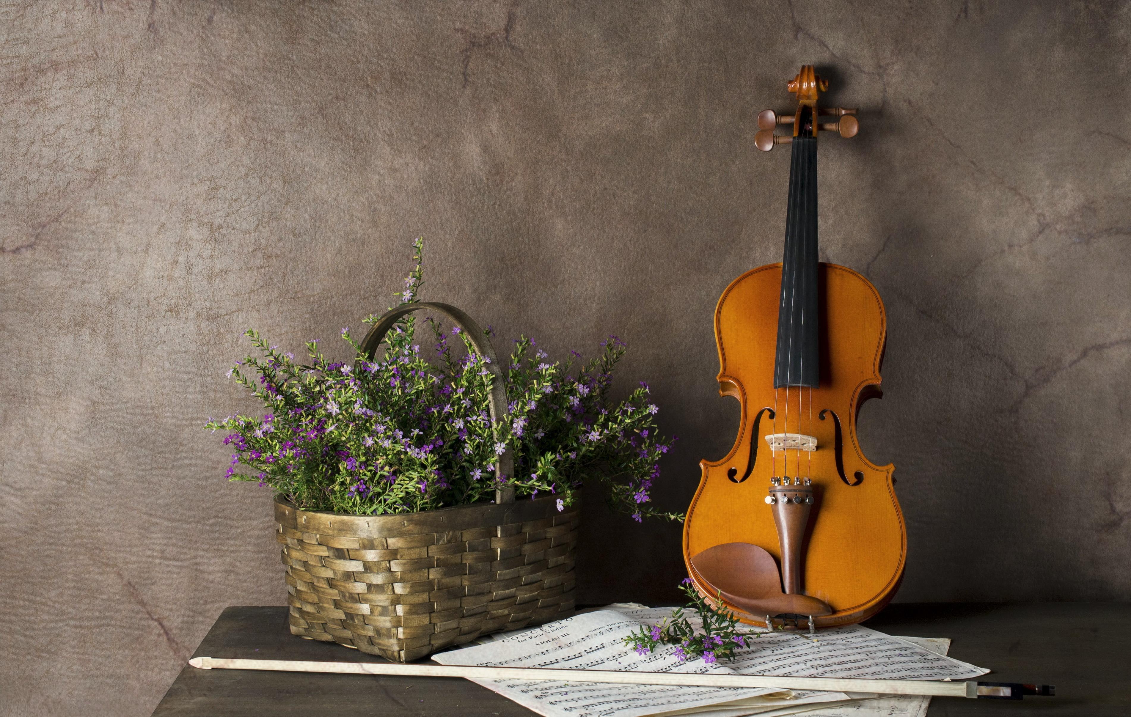 скрипка, ноты, торт  № 1908245 без смс