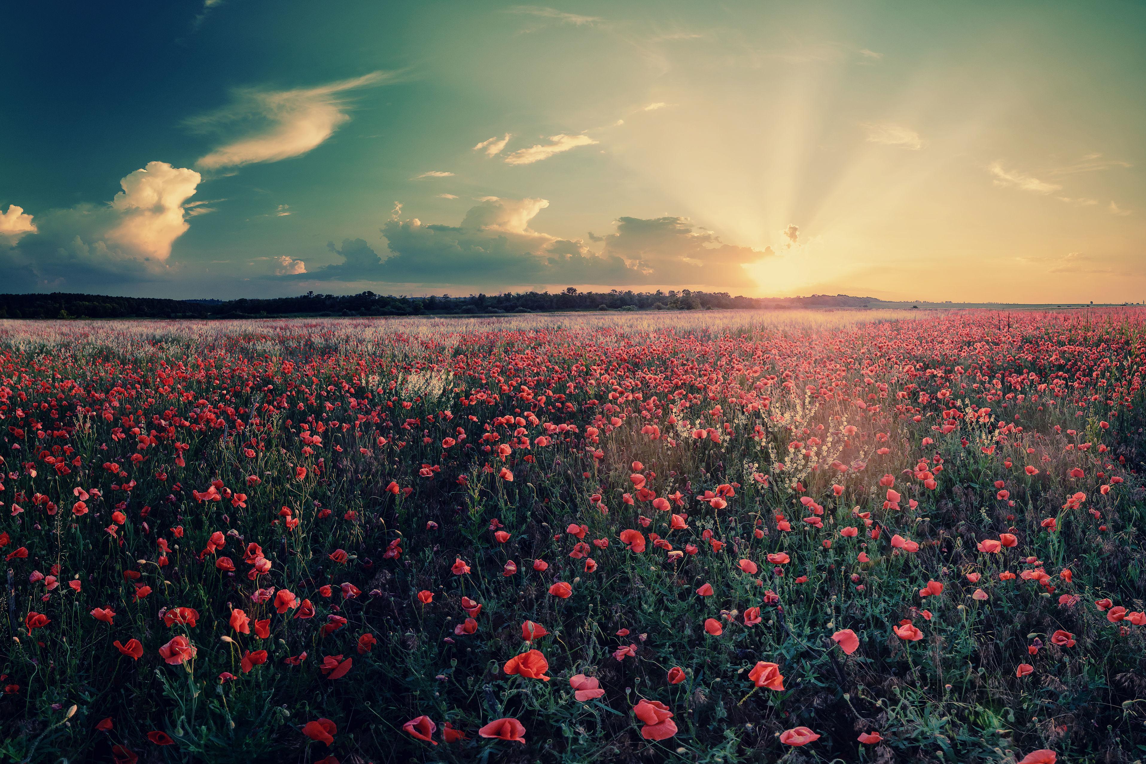 закат небо поляна цветы  № 3229833 без смс