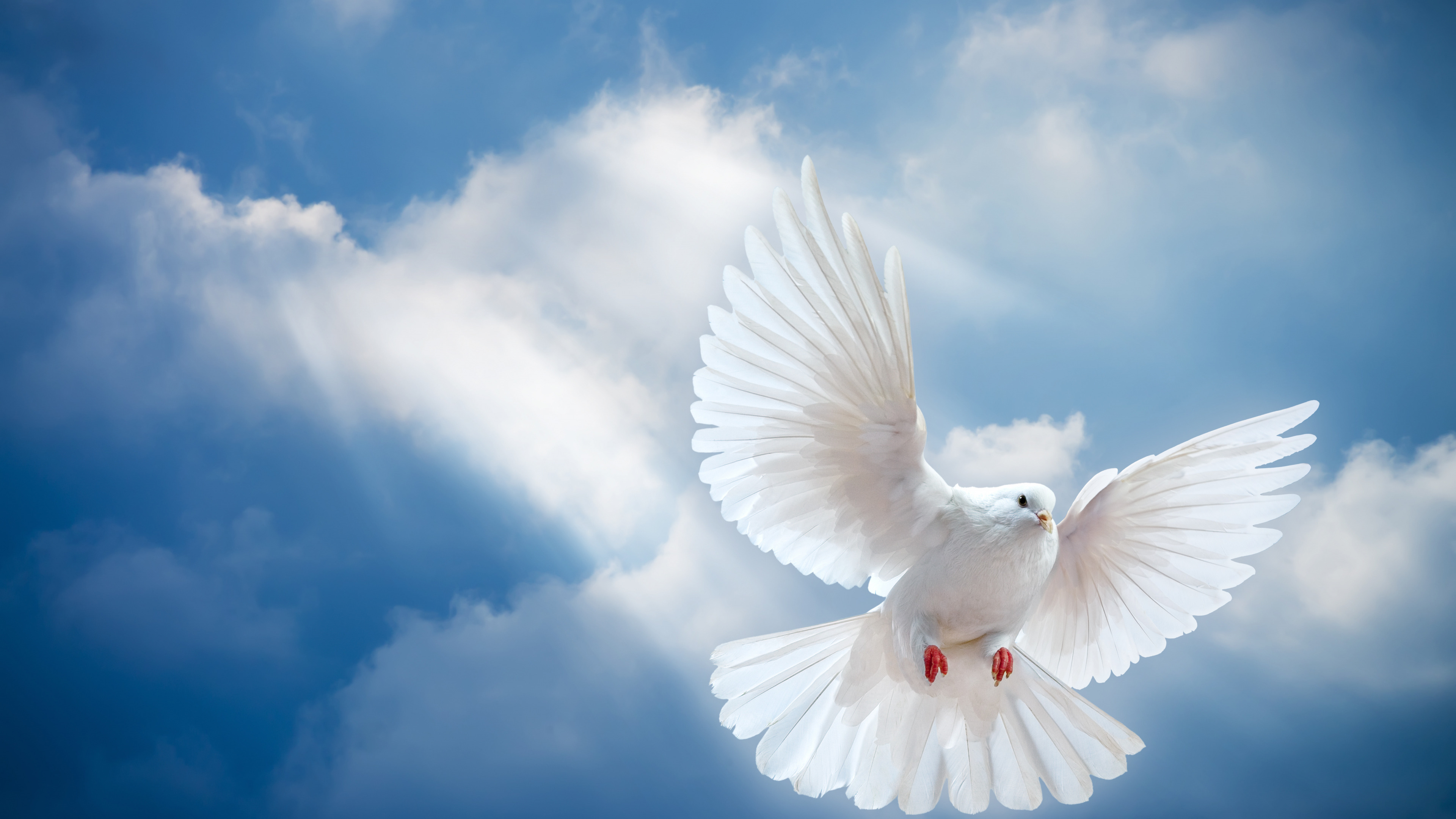 Картинка с небом и голубями