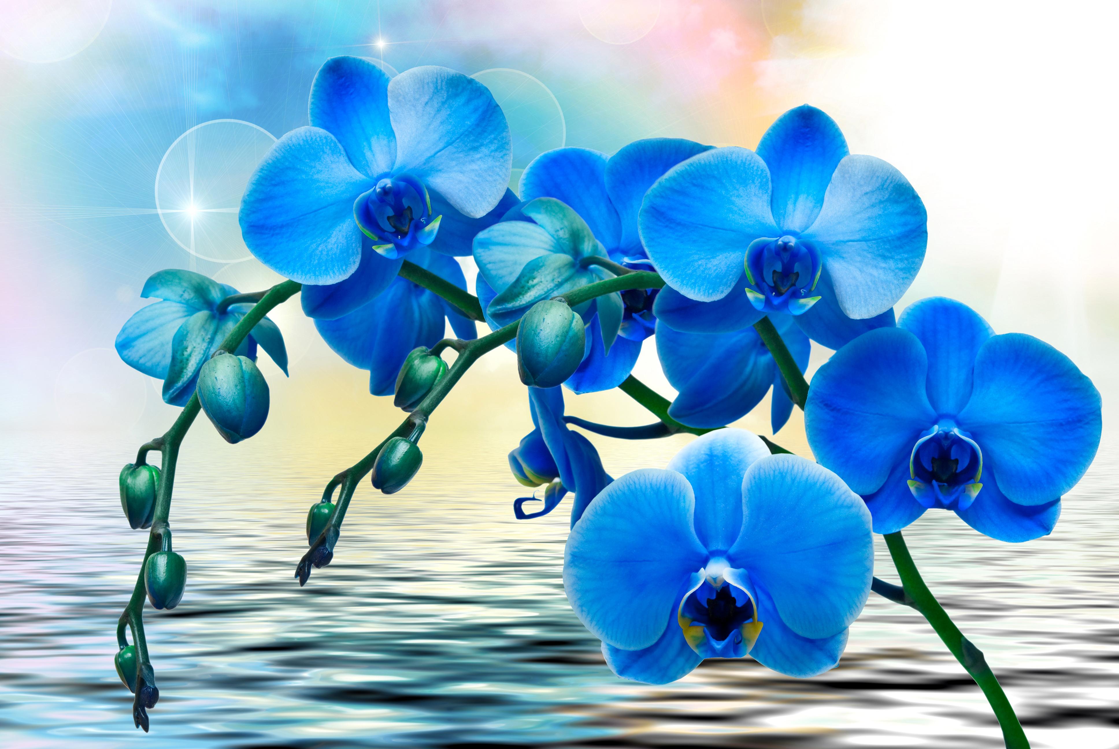 Первоцветы на даче фото
