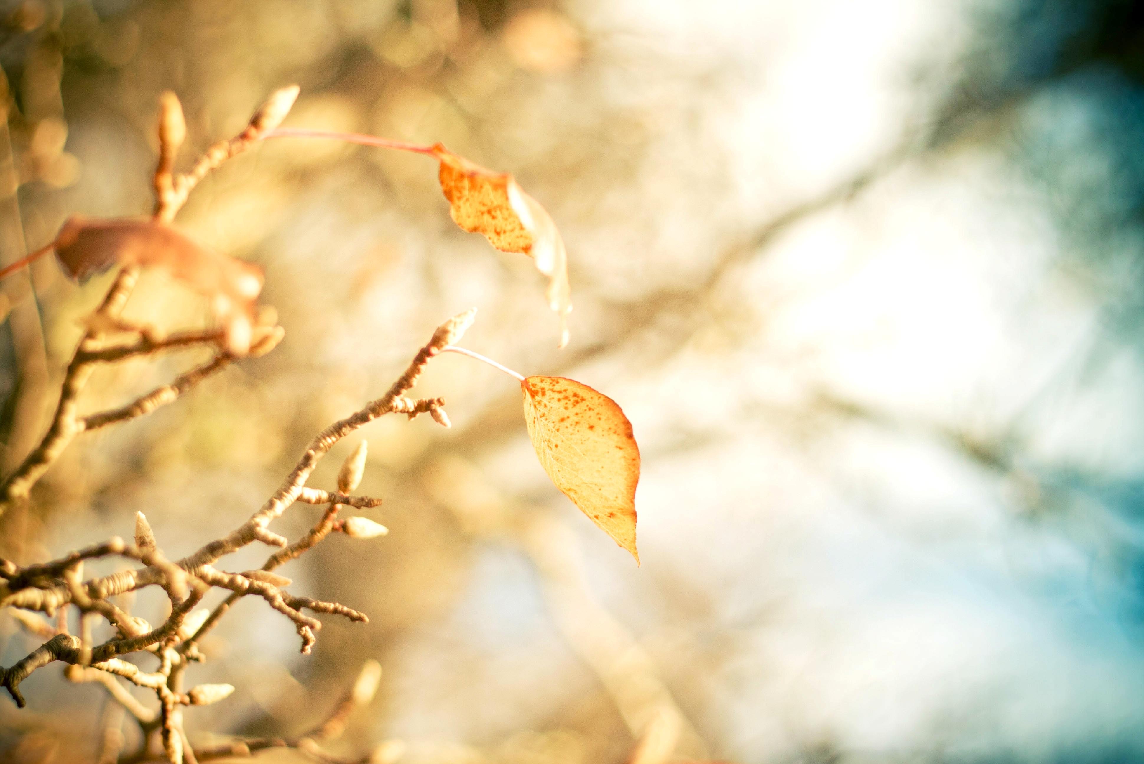 листья ветка фон  № 3219044 бесплатно