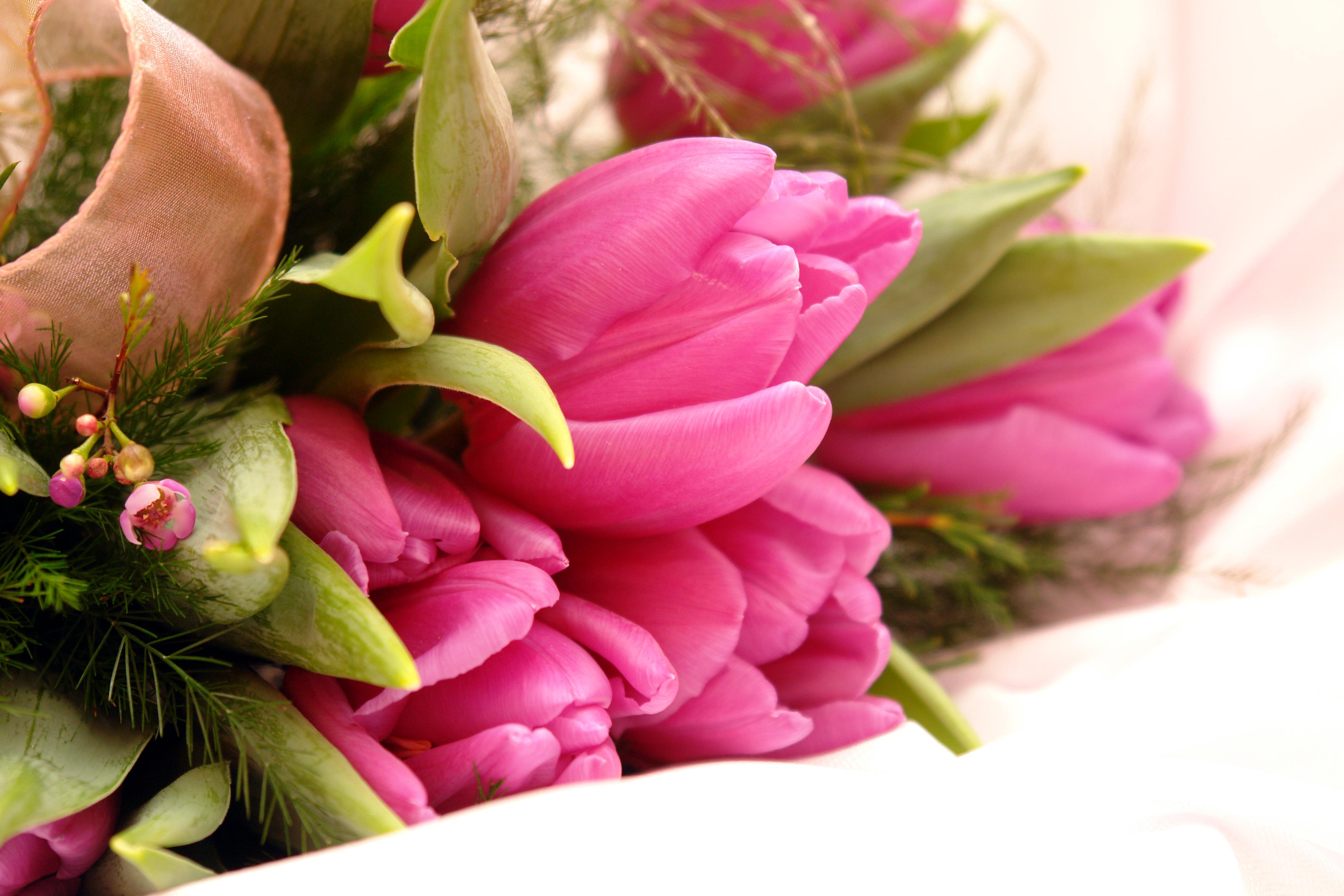 букет,тюльпаны,листья  № 415782  скачать