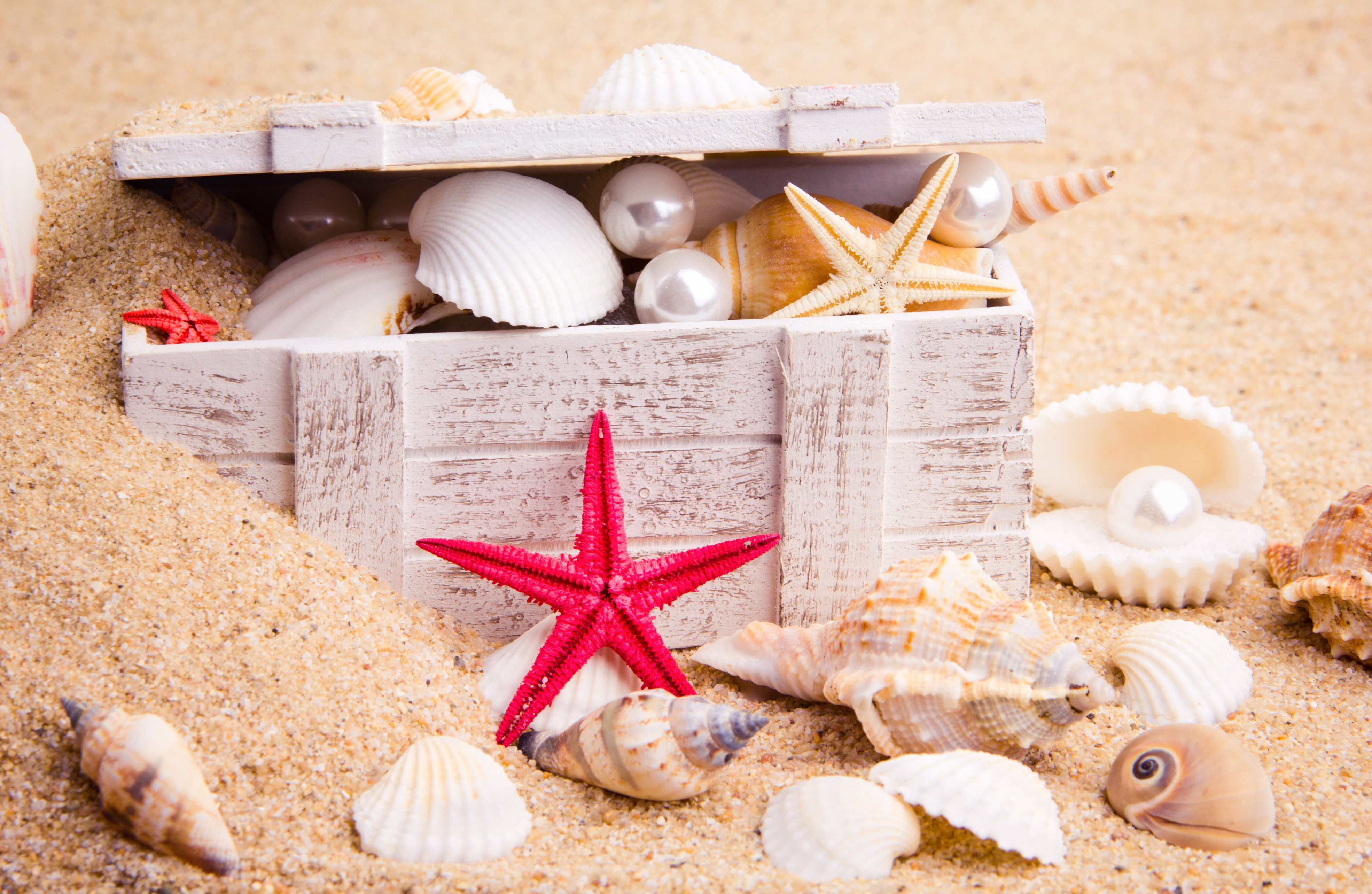 Фото с ракушками и песком