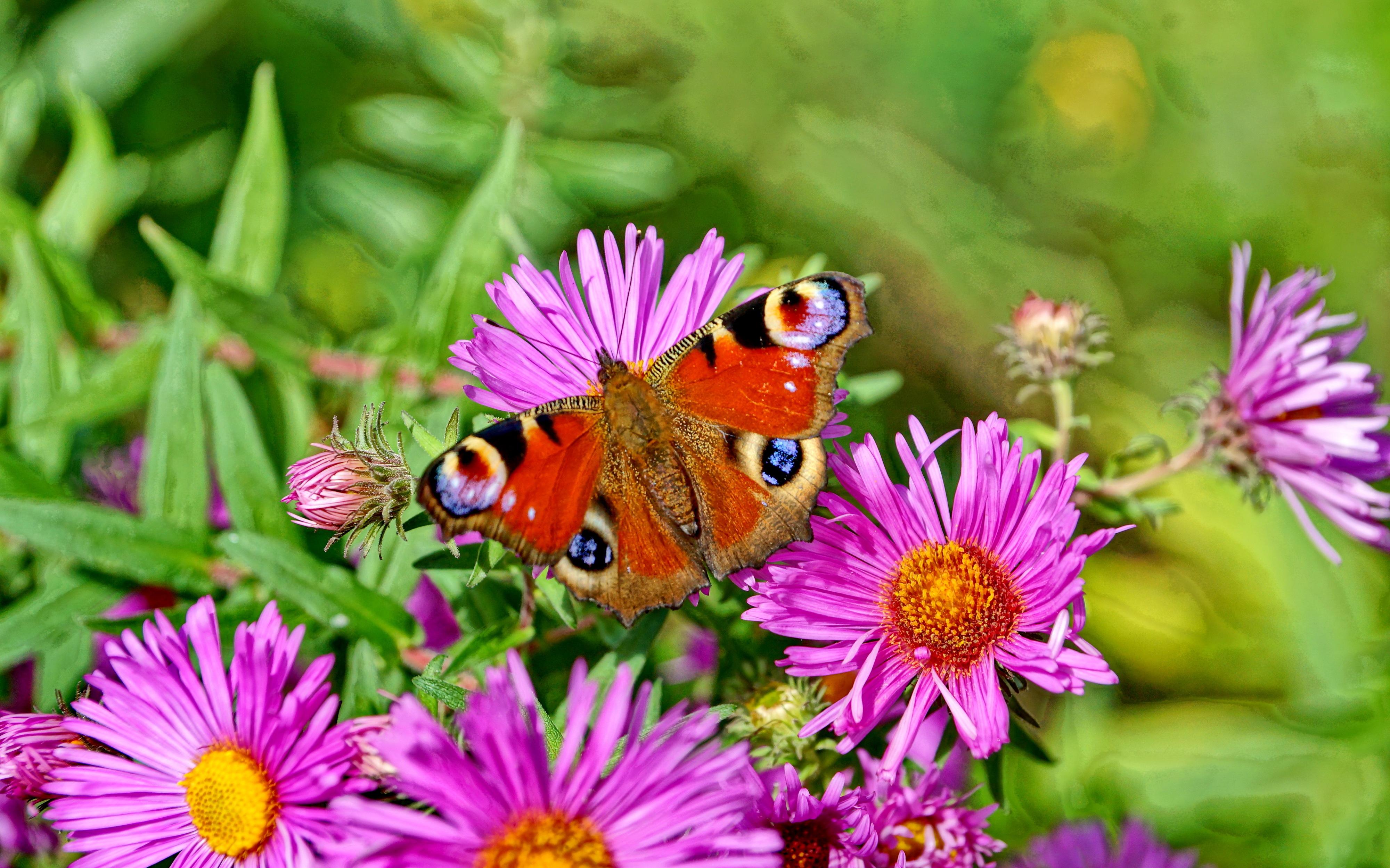 Картинки лето бабочки цветы
