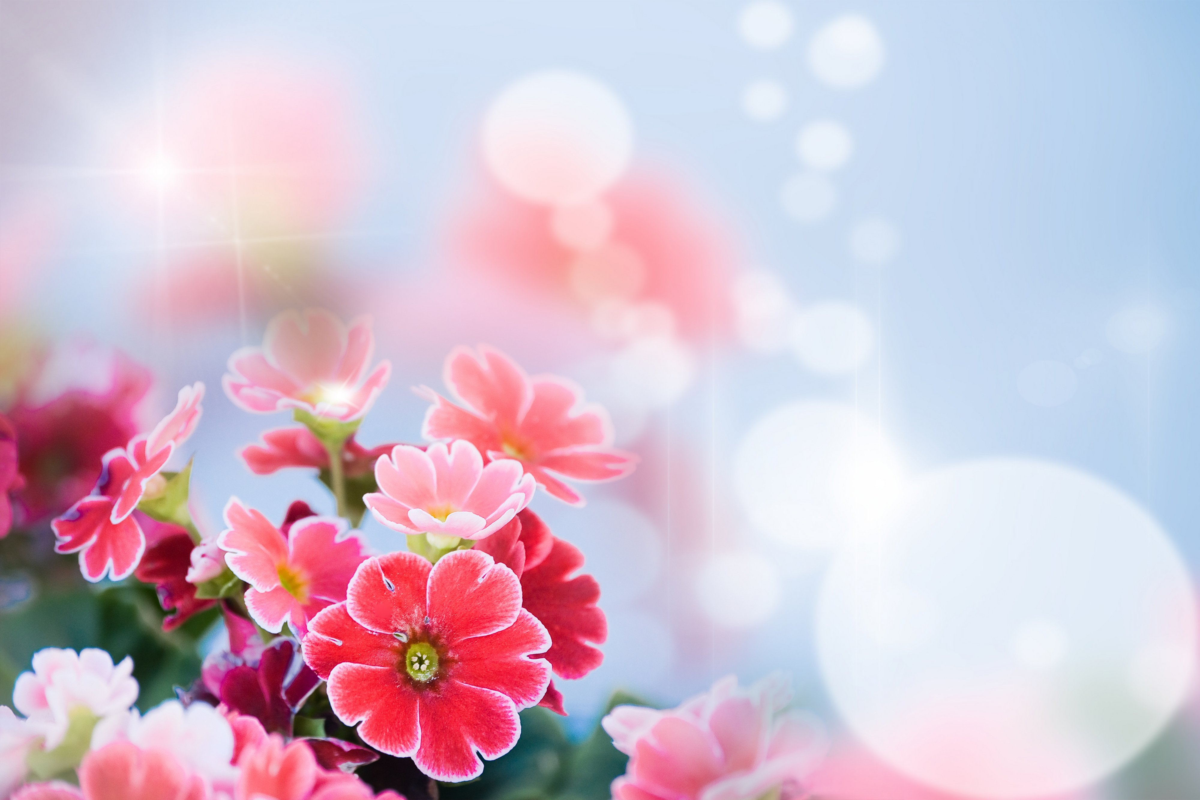Фото с цветами фон для