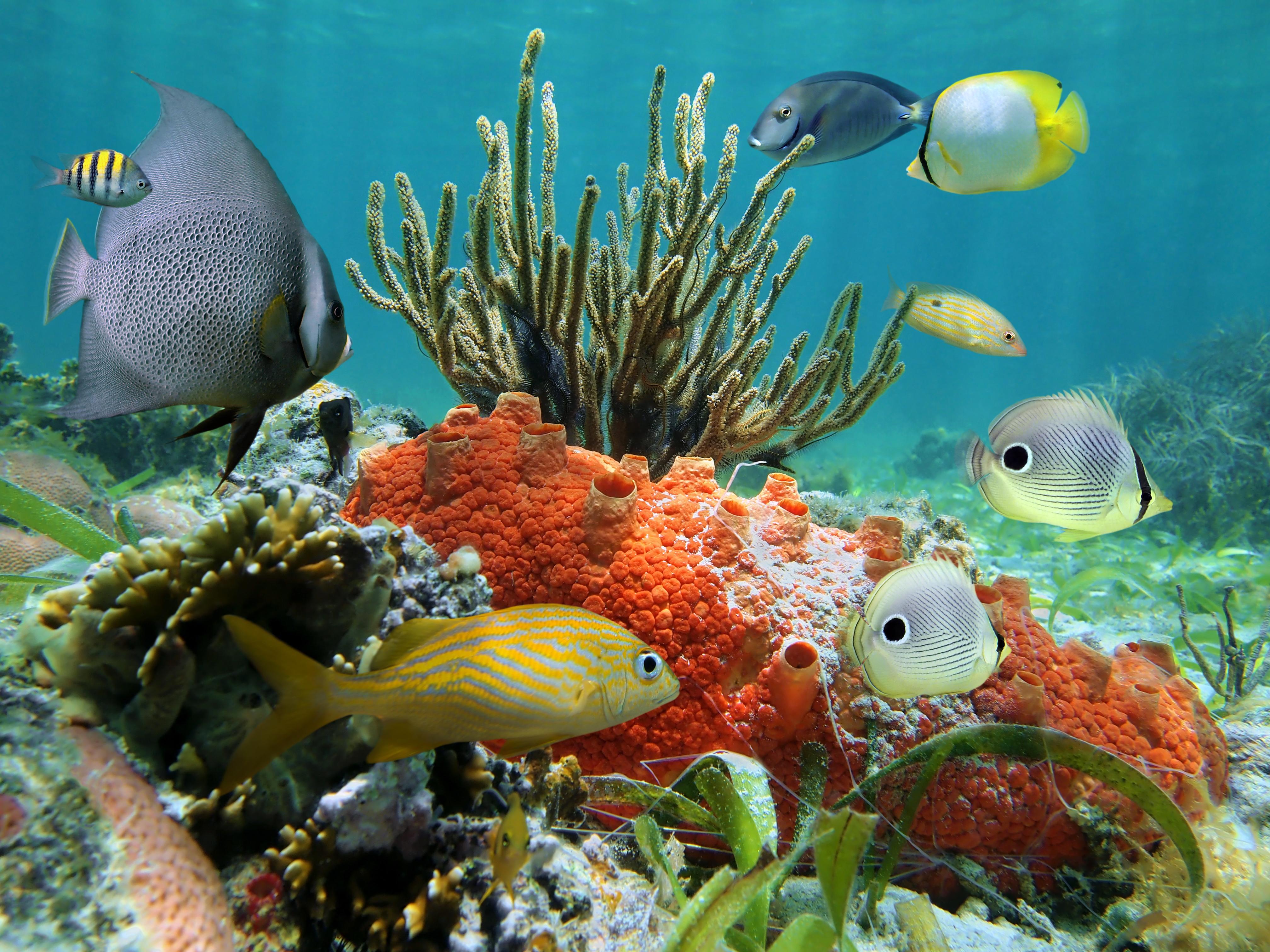 Яркие краски подводного мира  № 618973  скачать