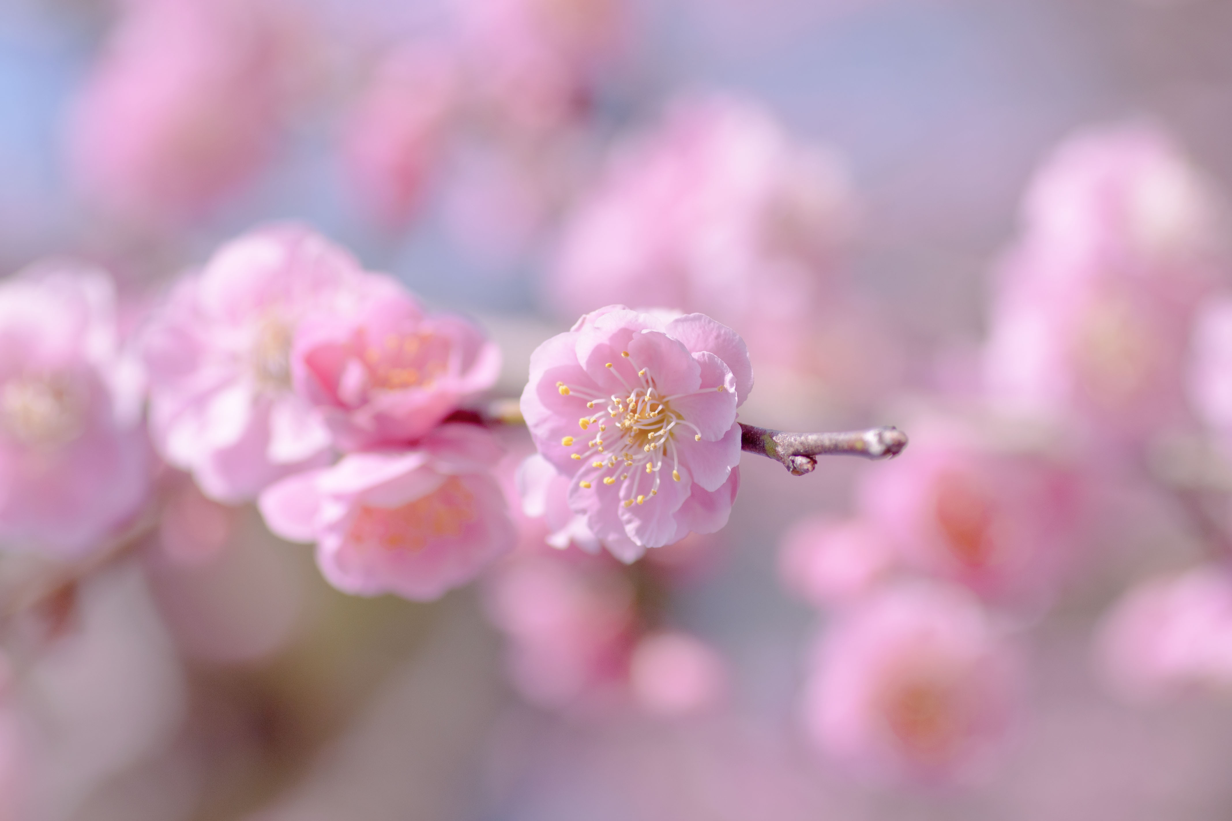 Опавшие лепестки цветения  № 3170400  скачать