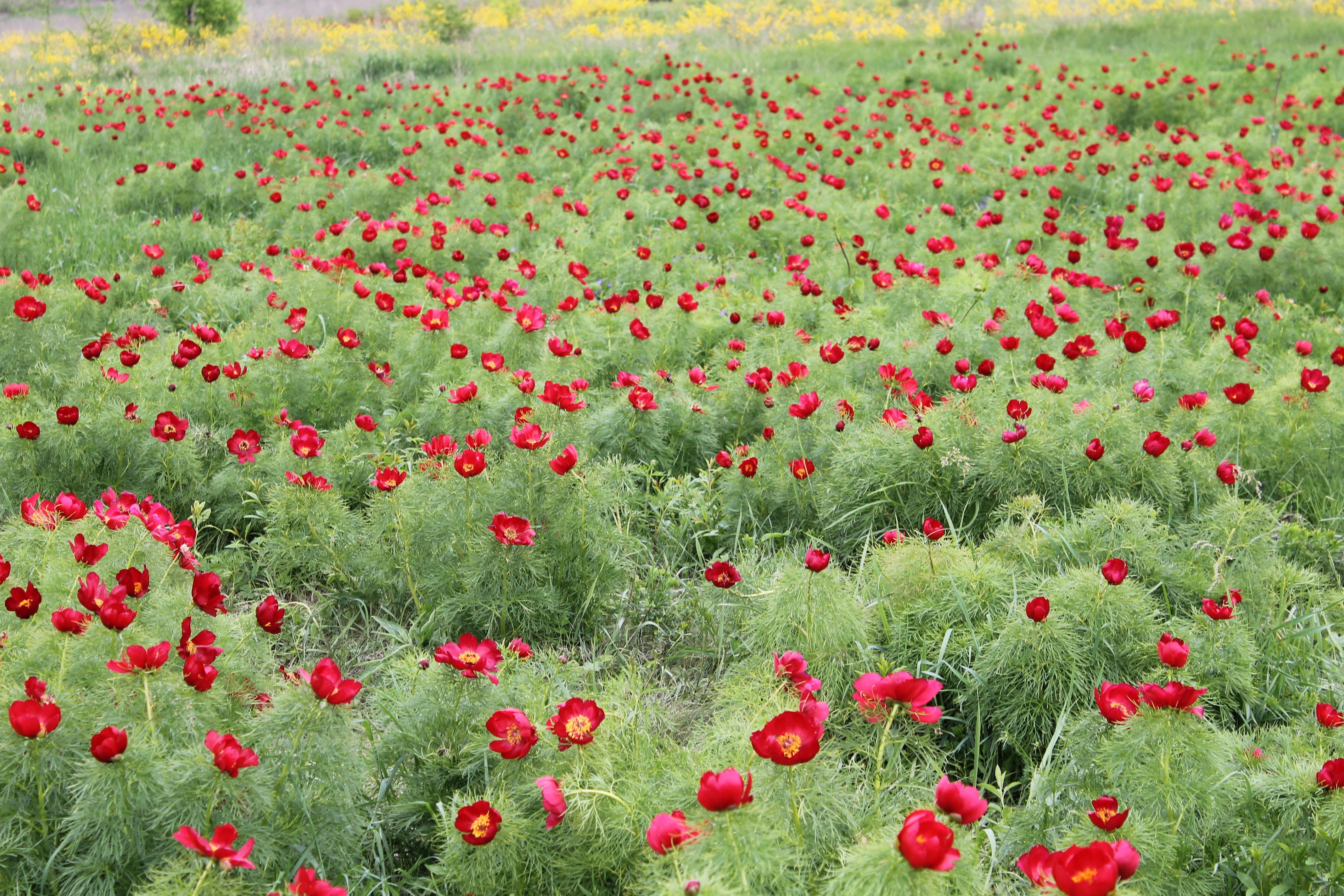 поздравительную лазоревый цветок фото всегда делаю