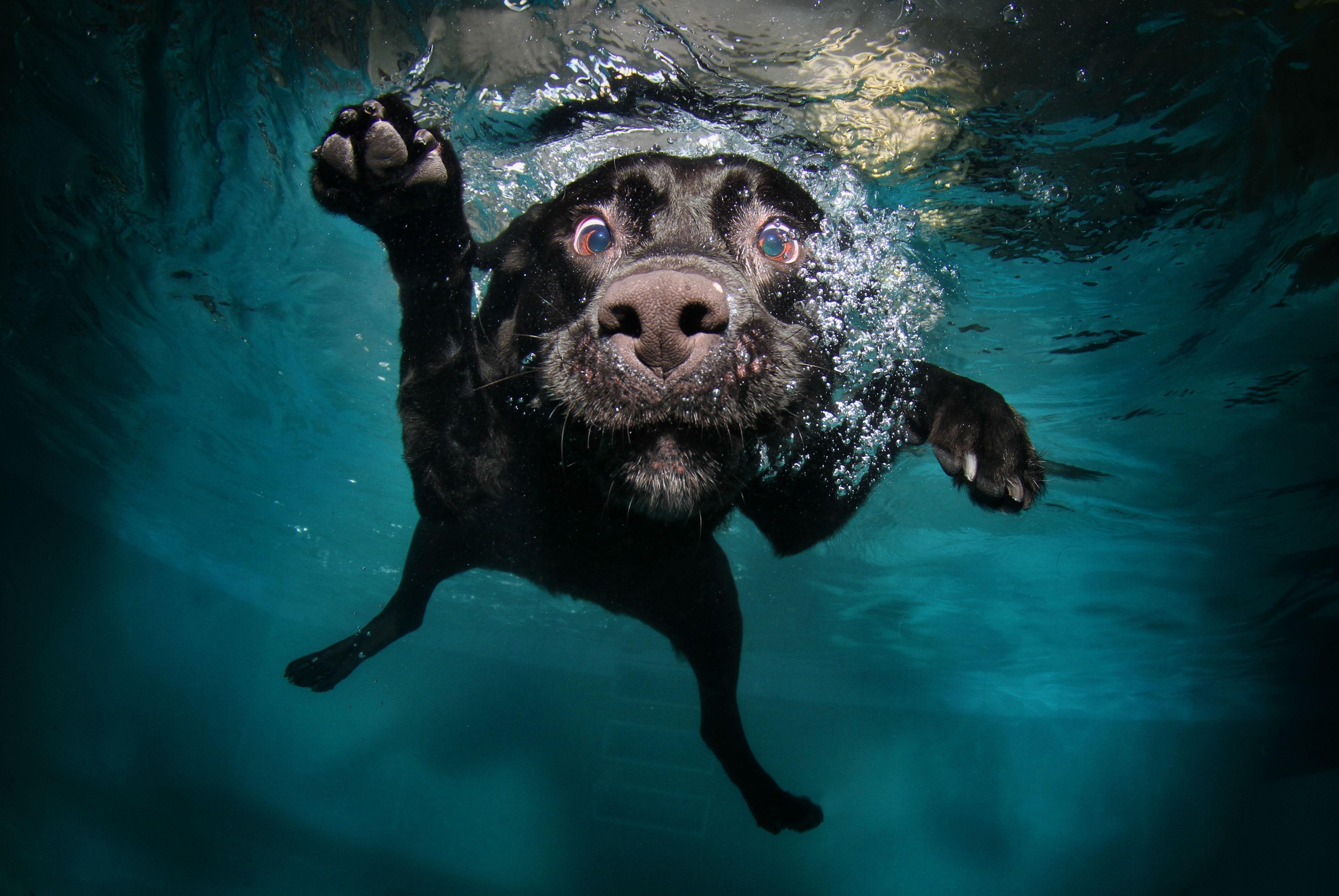 плавающий картинки для экрана все