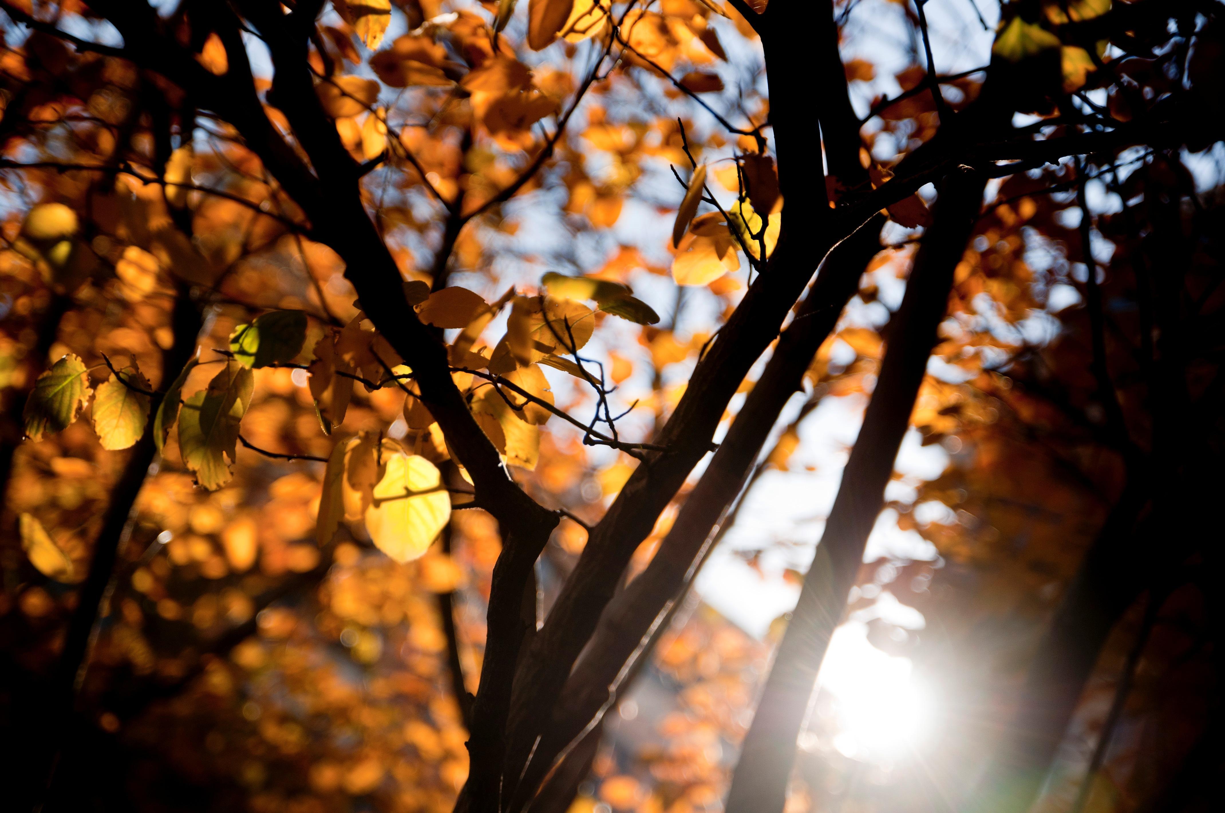 деревья листва осень солнце  № 3191723 бесплатно