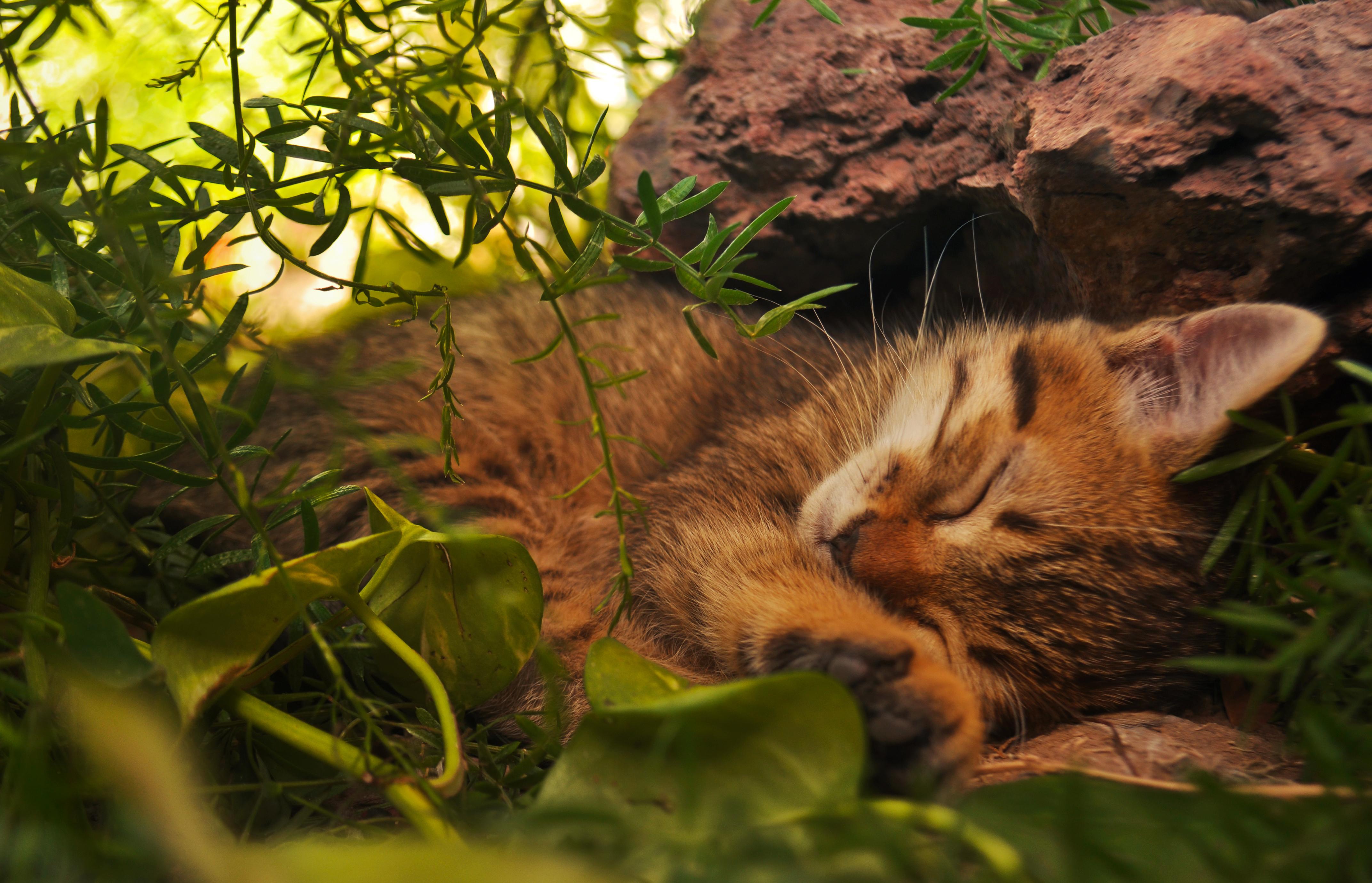 природа животные трава кот  № 1316912 без смс