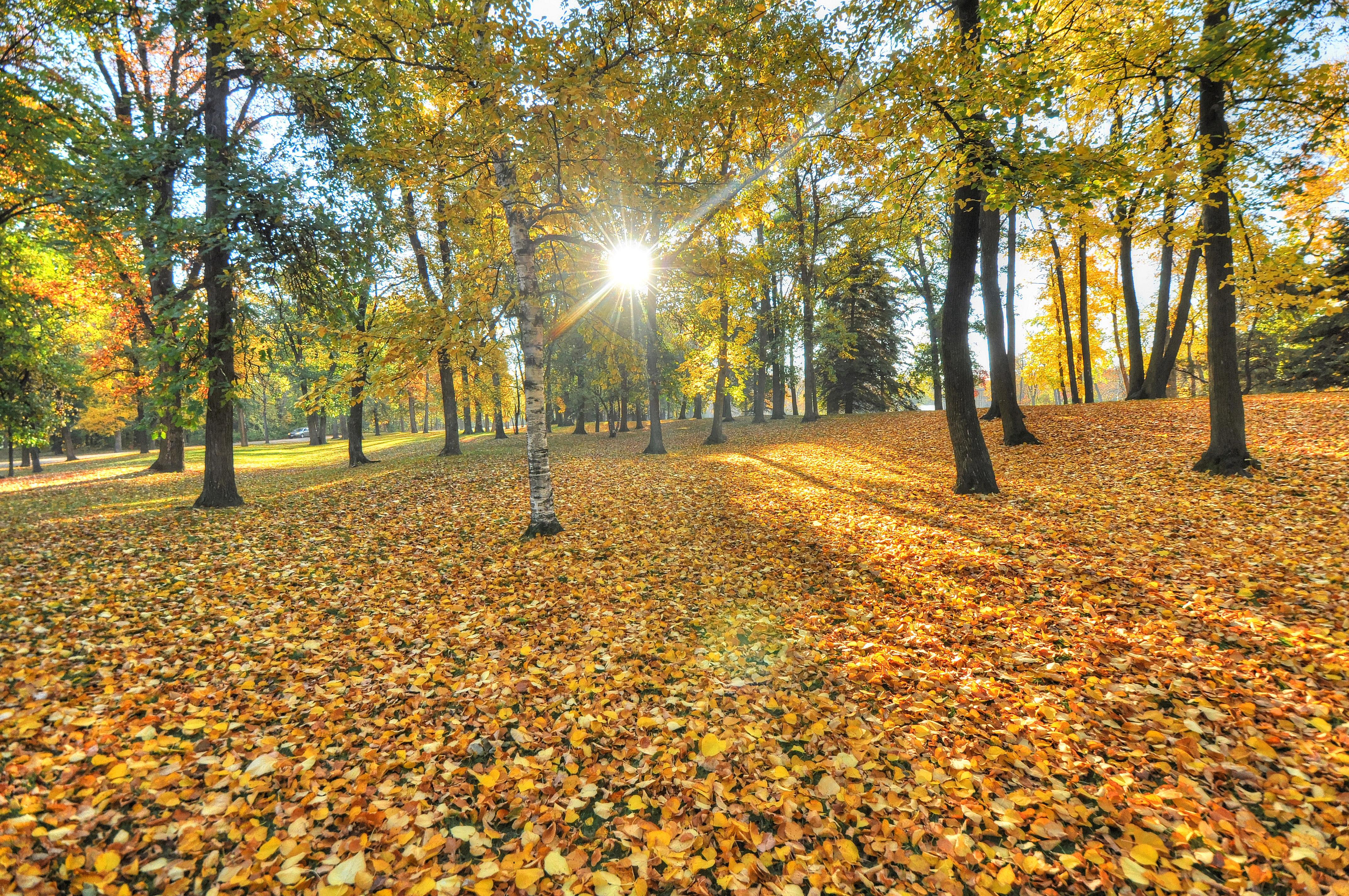 доброе утро картинки с лесом осенним поскольку