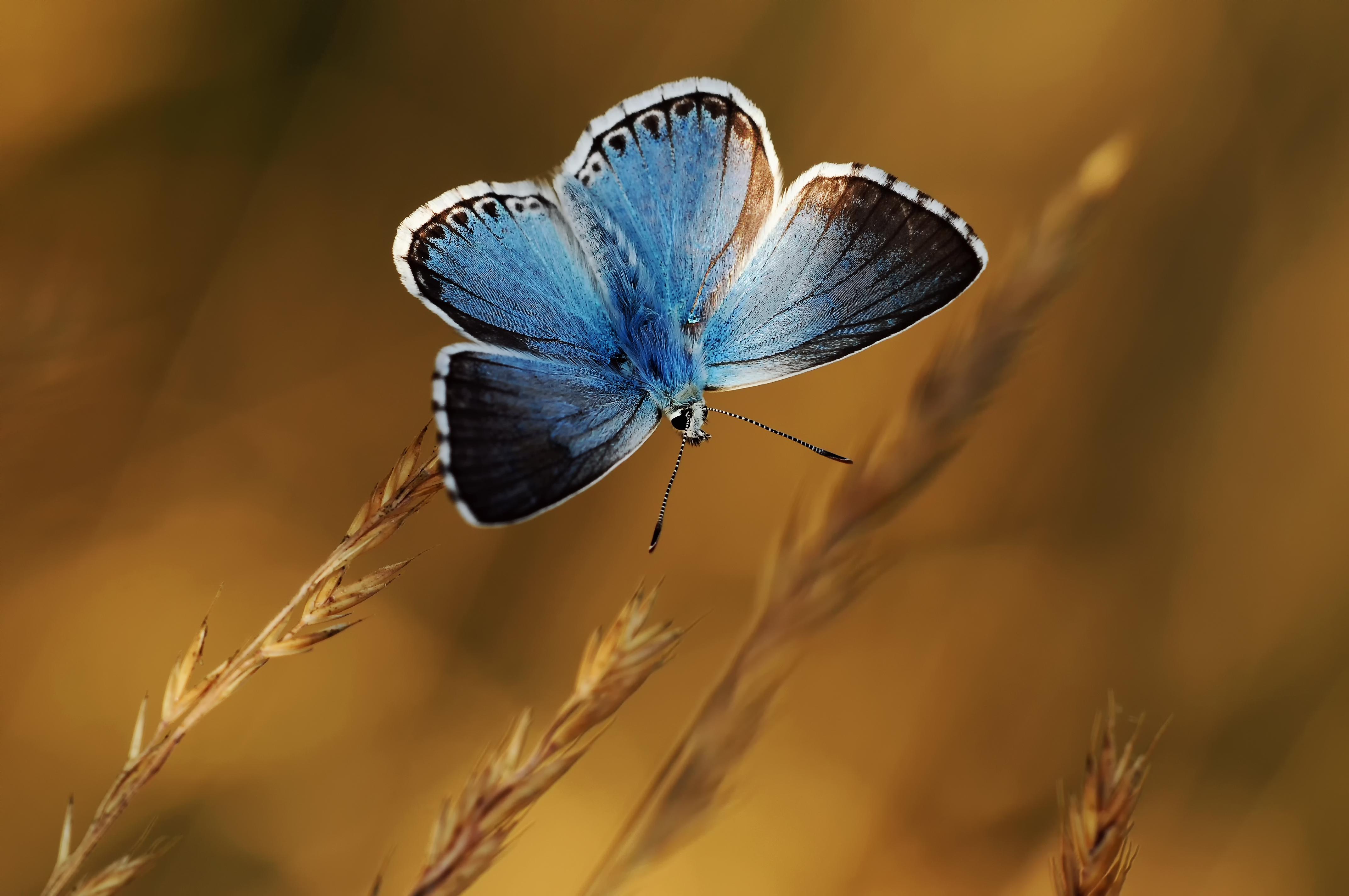 Бабочки растение макро  № 3660340 загрузить