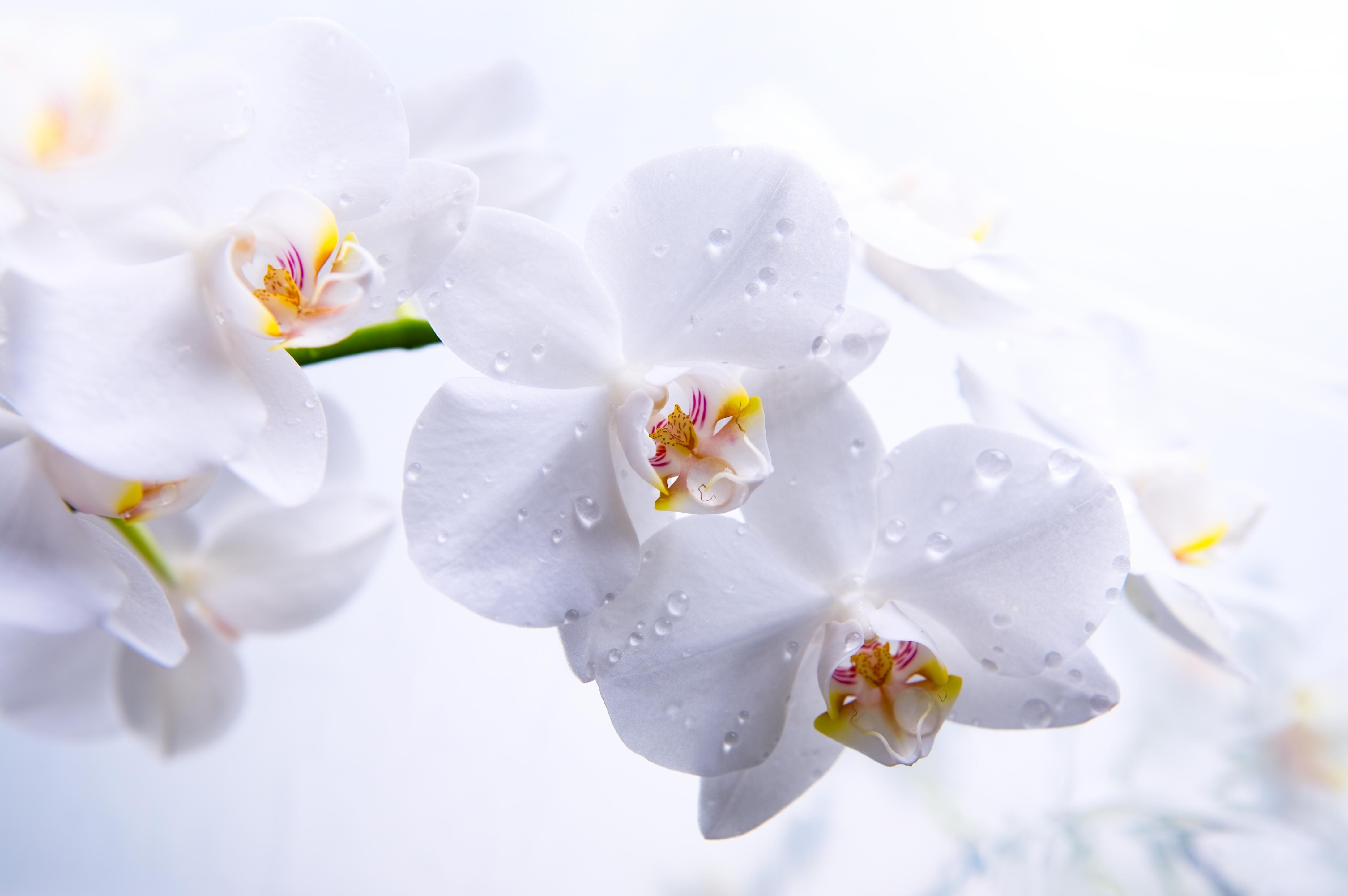 Красивые обои цветы на рабочий стол очень высокого качества