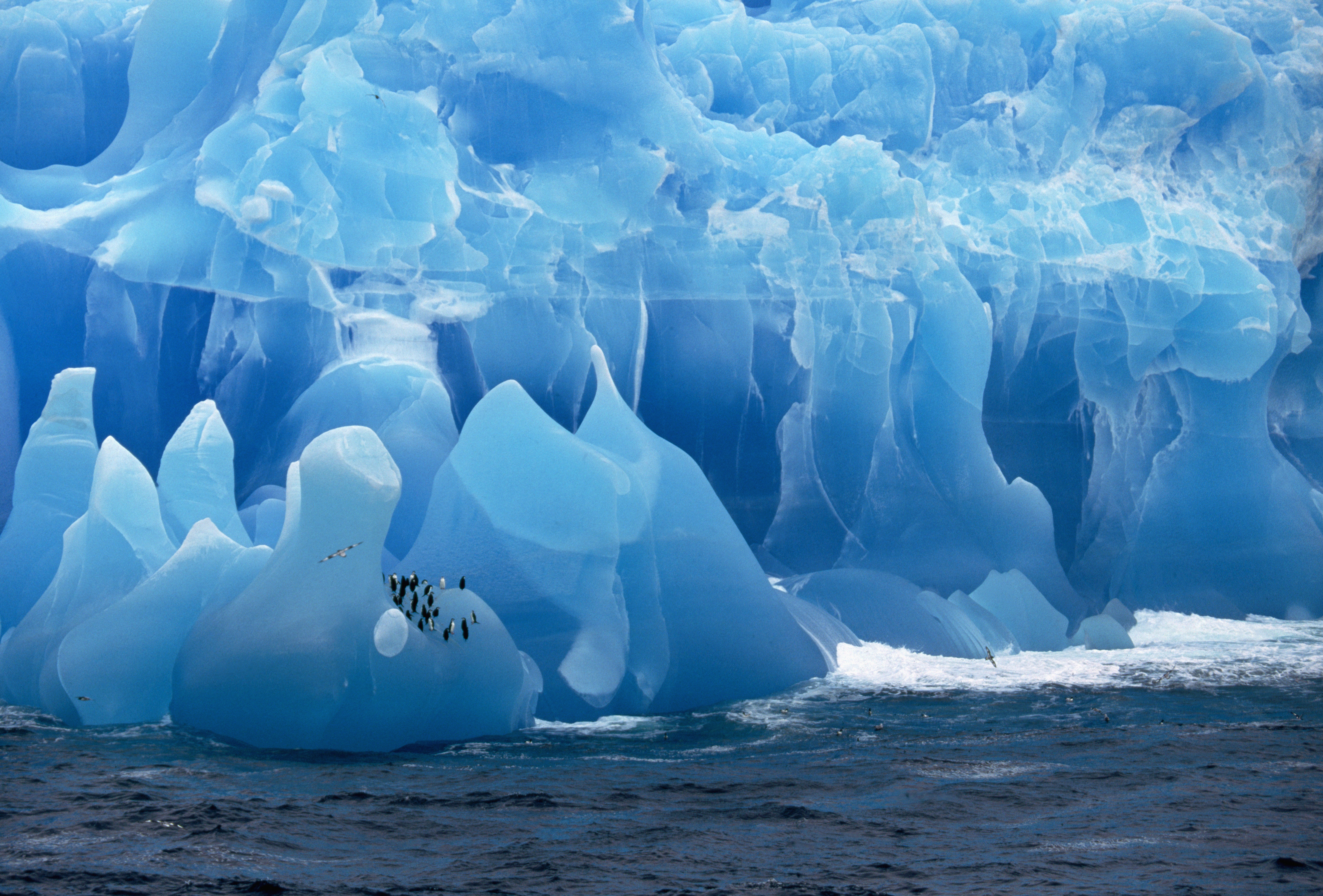 пингвины на глыбе льда  № 91180  скачать