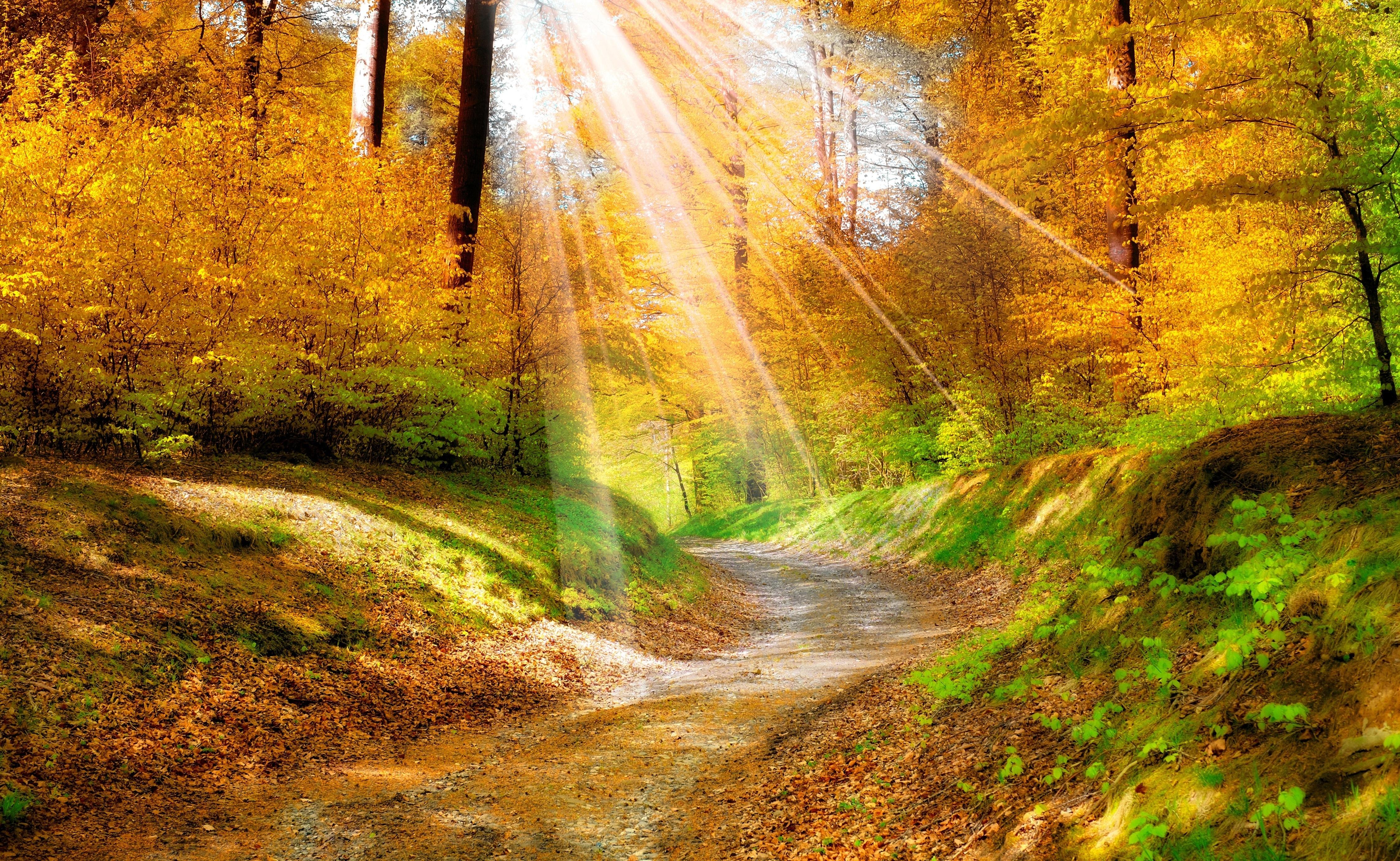 Открытки лучи солнца