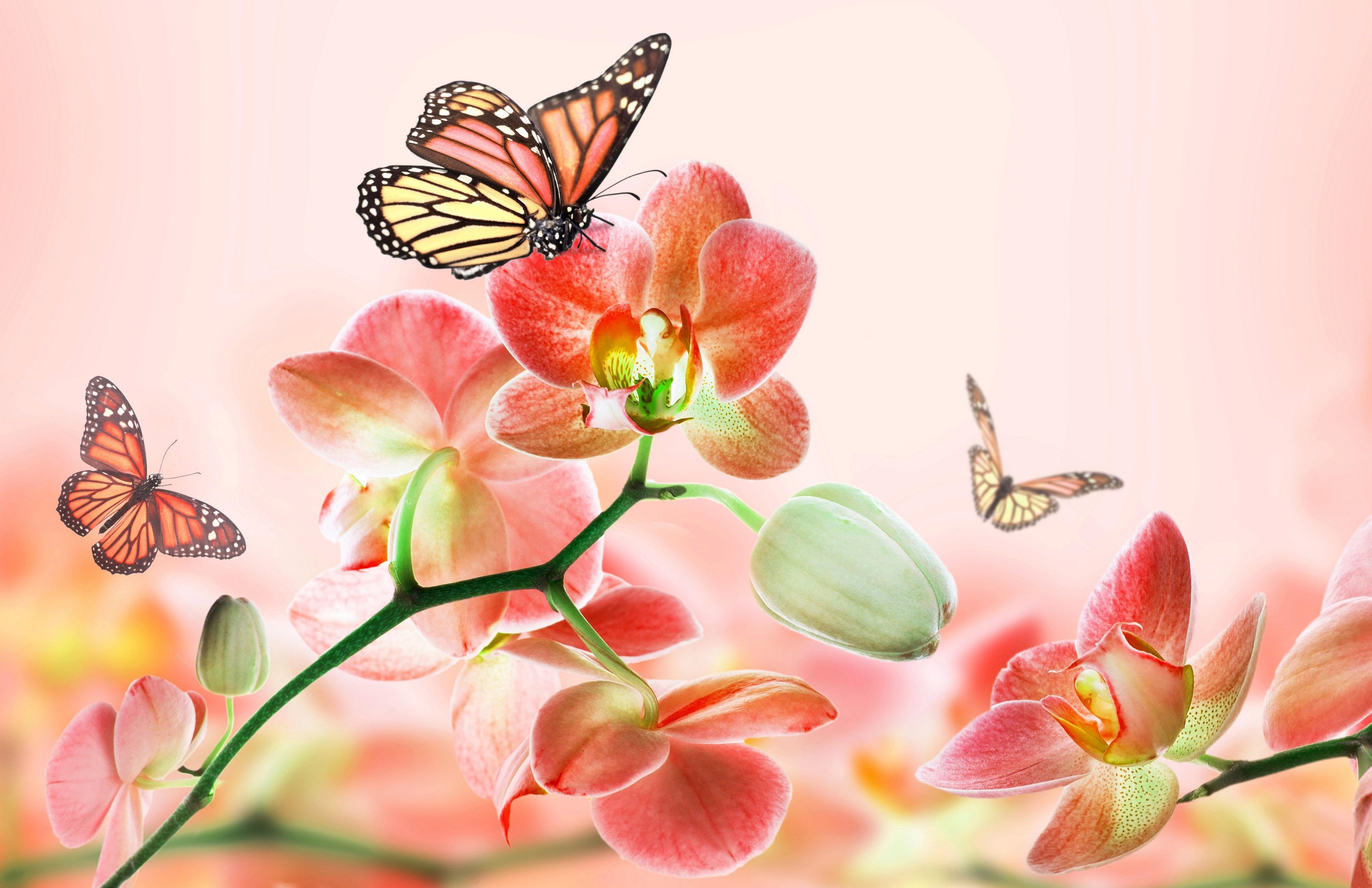 бабочки из лепестков  № 2303896 загрузить