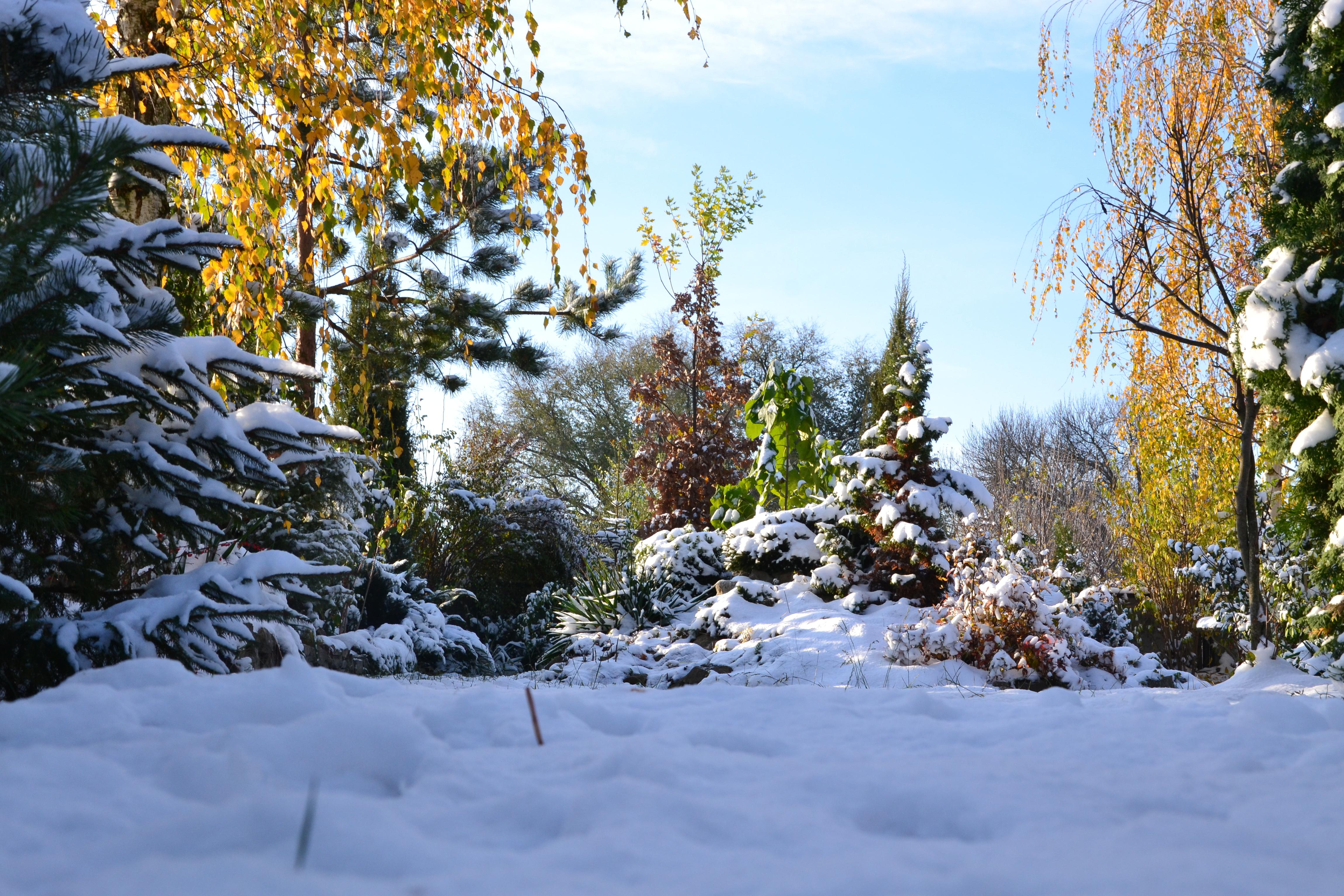 Мало того, пейзаж осень в снегу силу большой площади