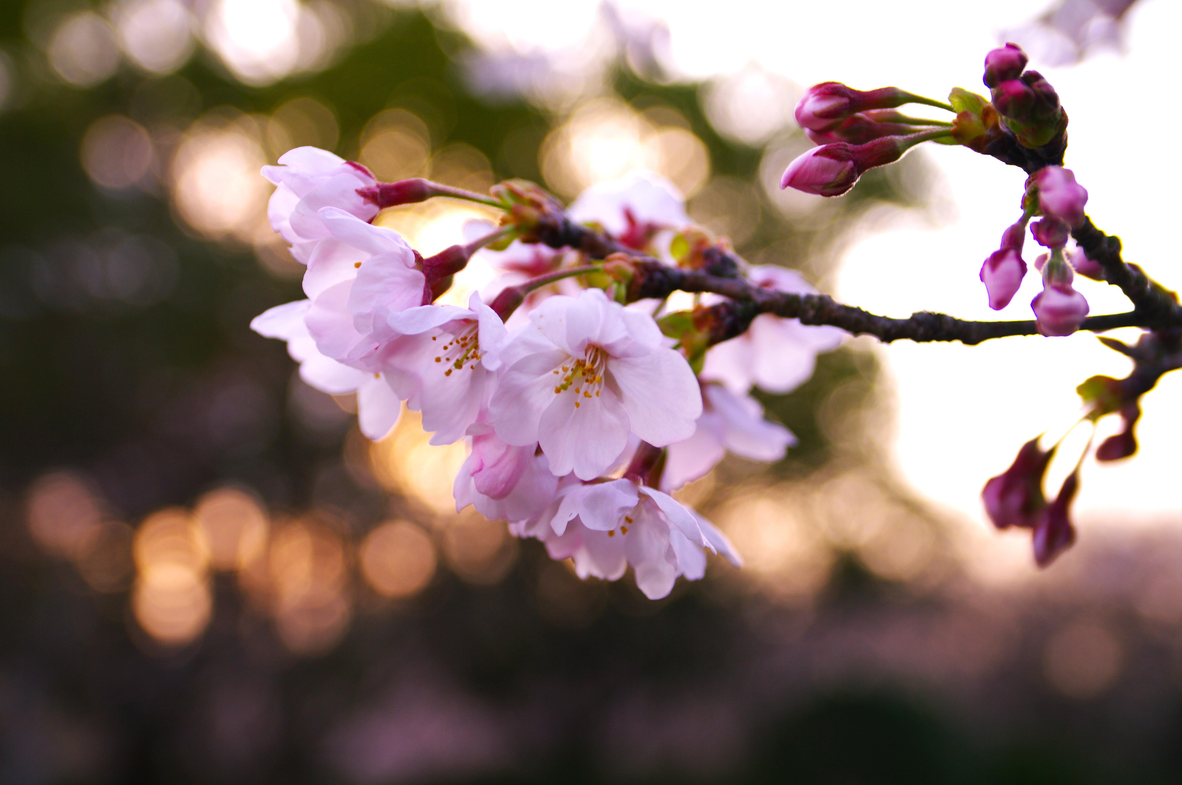 Опавшие лепестки цветения  № 3170380 загрузить