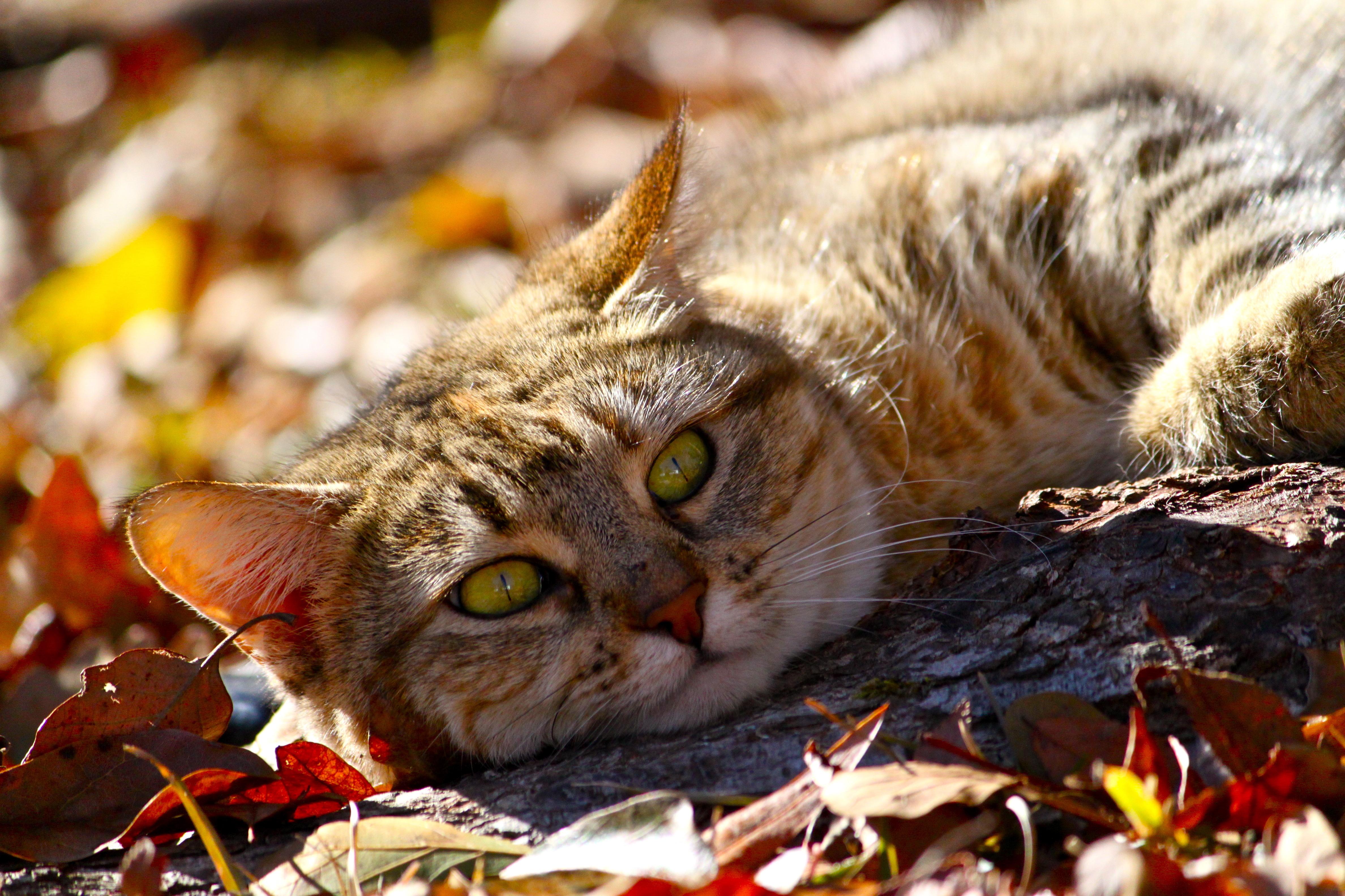 кот животное природа  № 2038164 загрузить