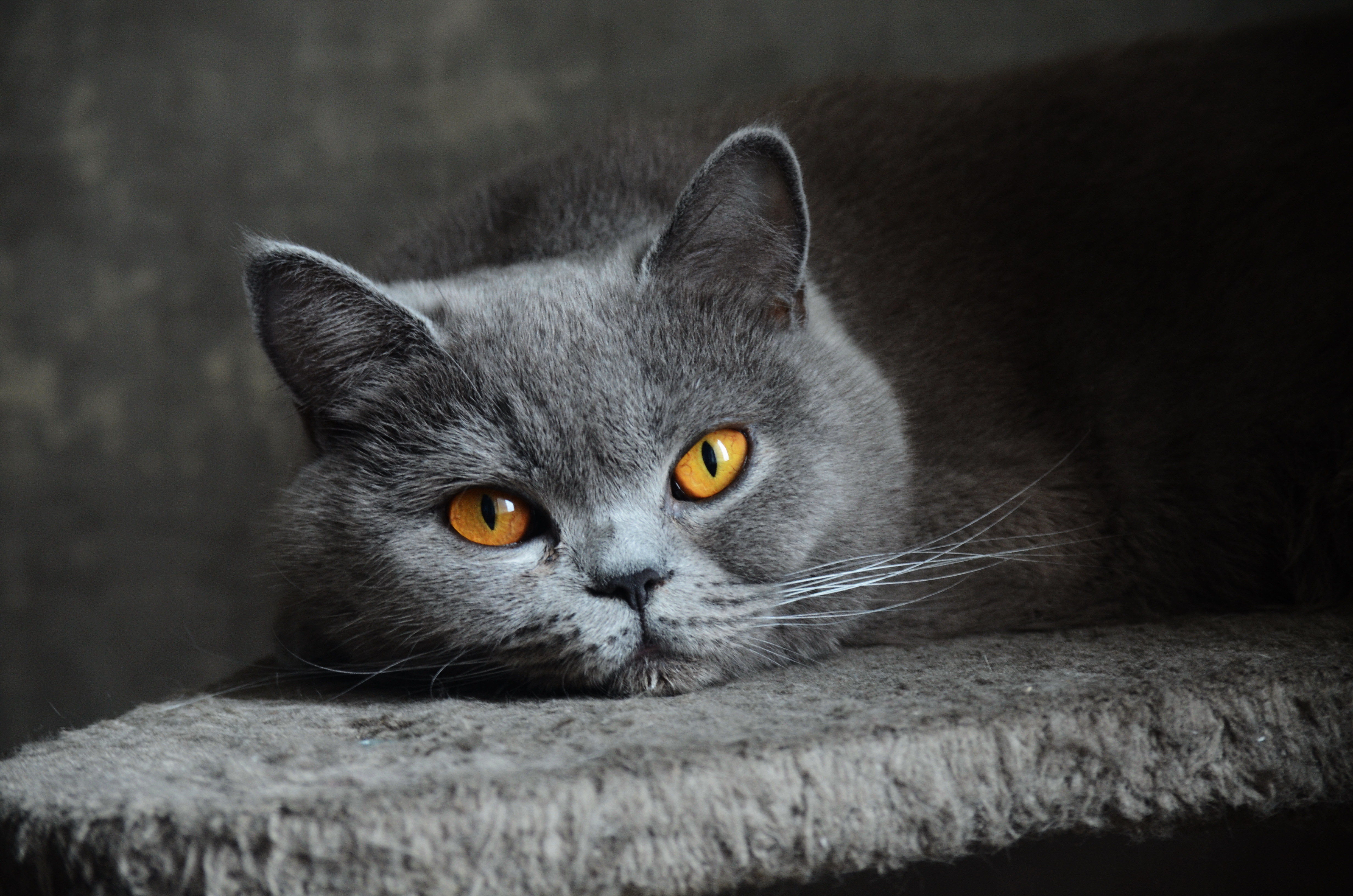 Картинки с котом серым, морозы прикольные