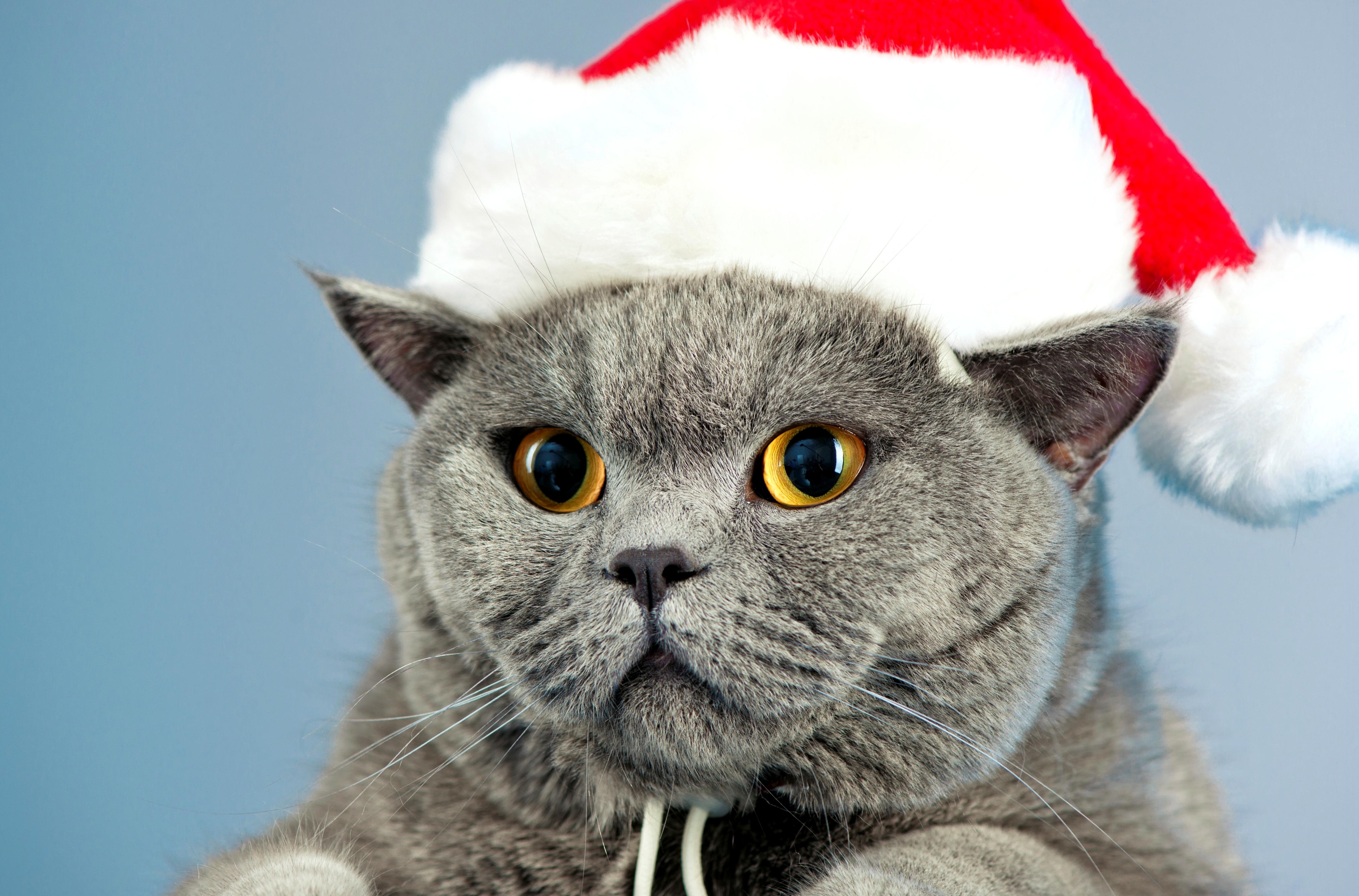 фото котиков в шапочках новогодних хозяйства горлиц