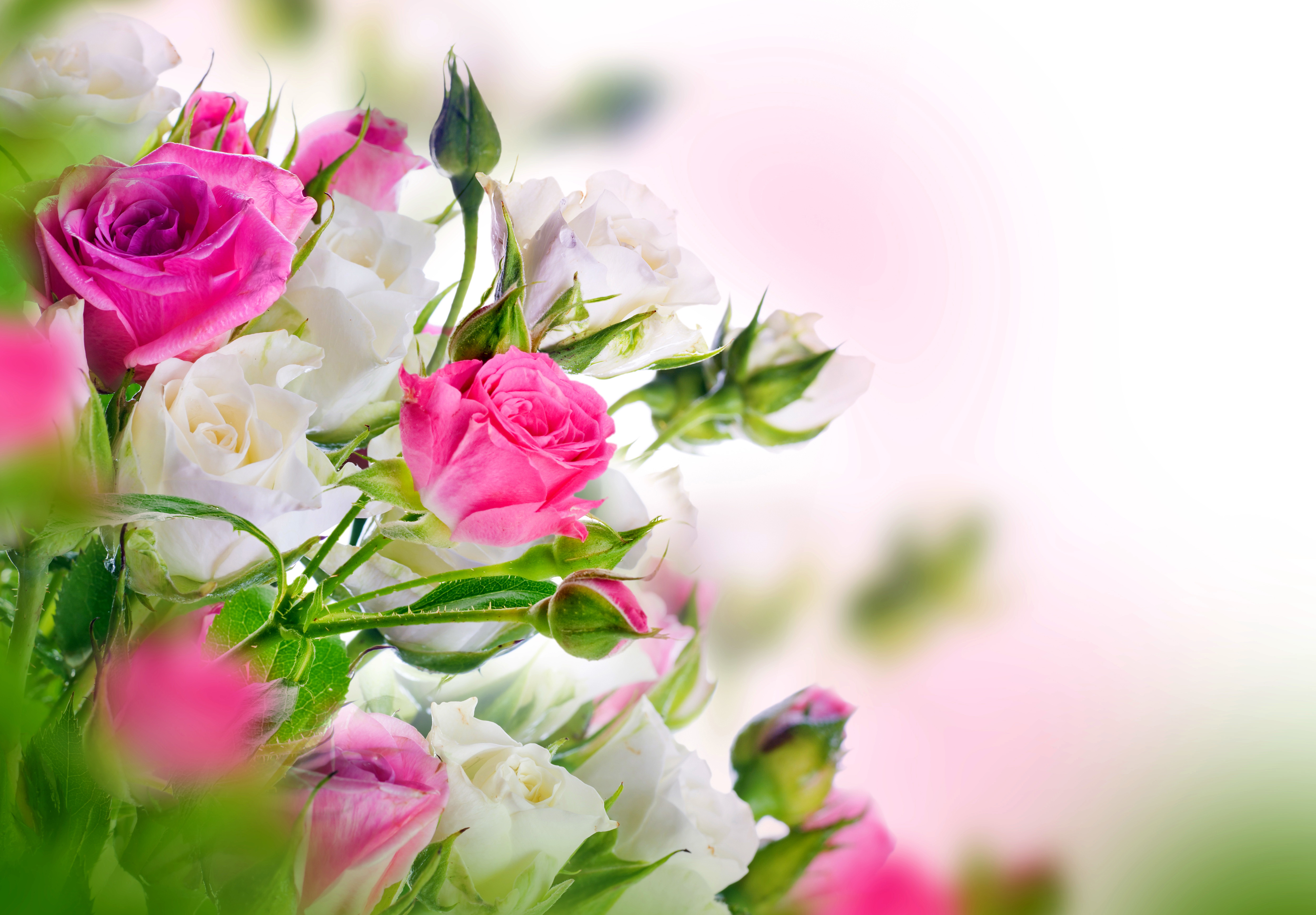 Шаблон открытки с букетом роз