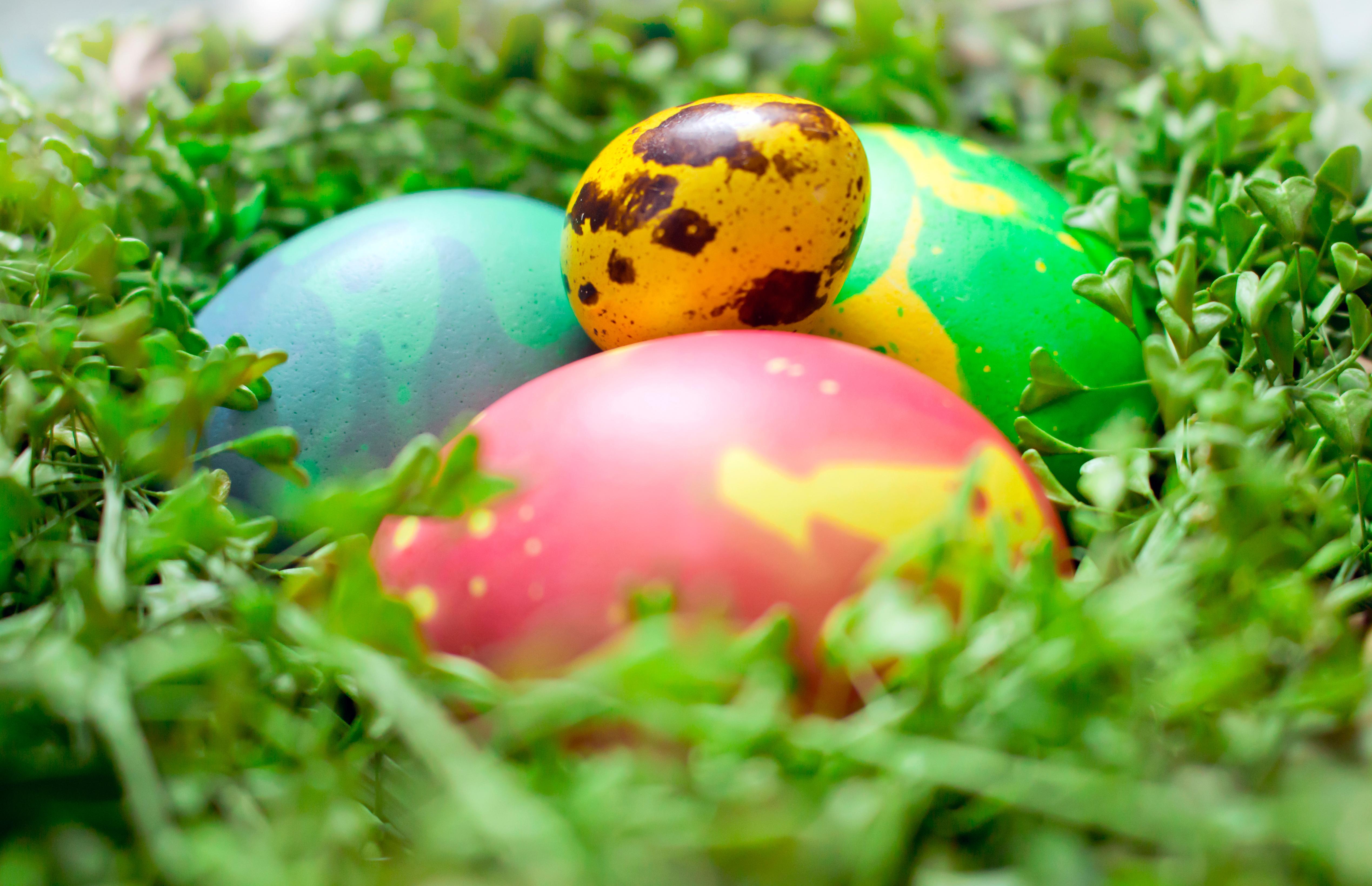 Фото крашенных яиц на рабочий стол