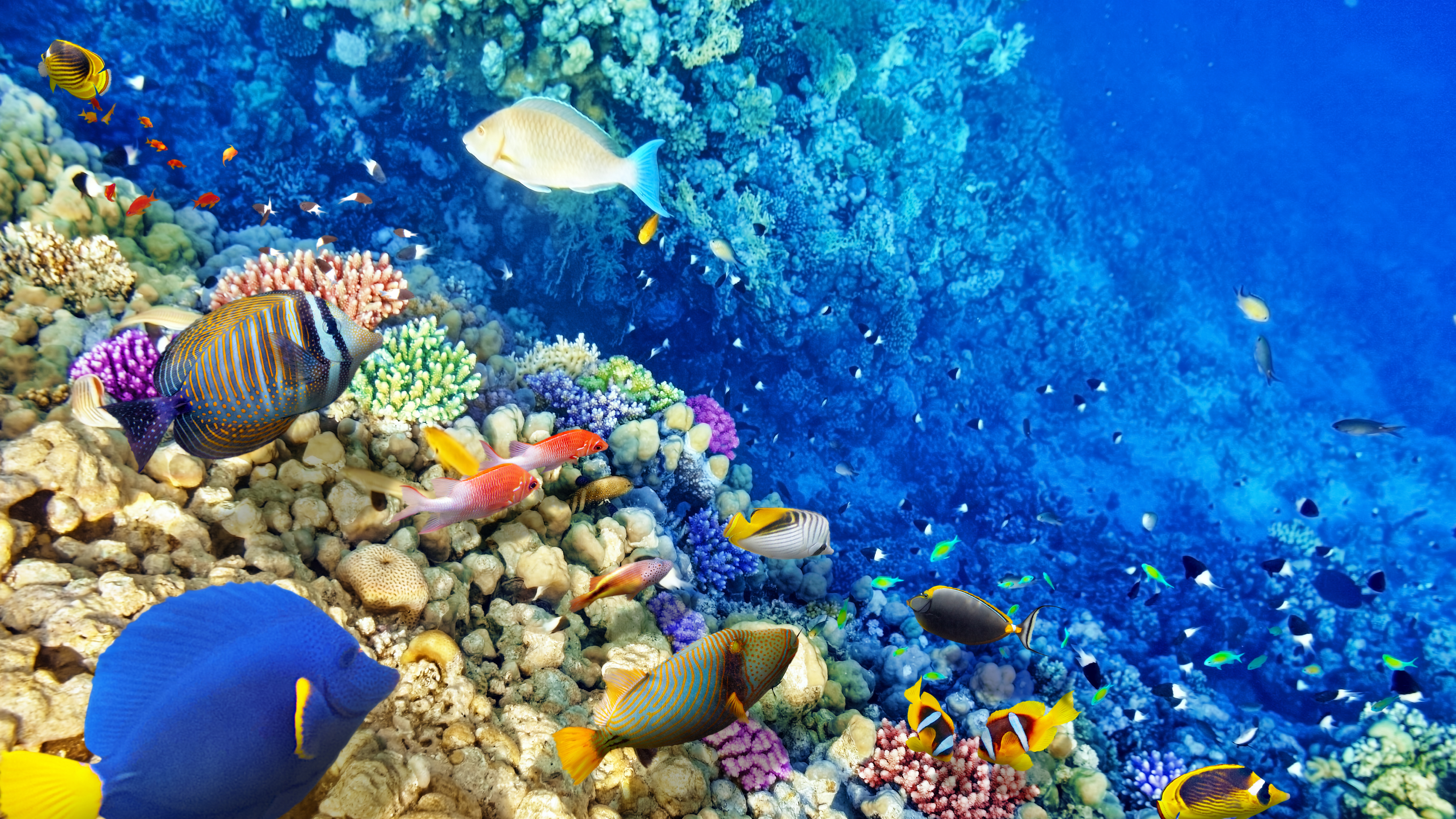 Картинки на рабочий стол море с рыбами