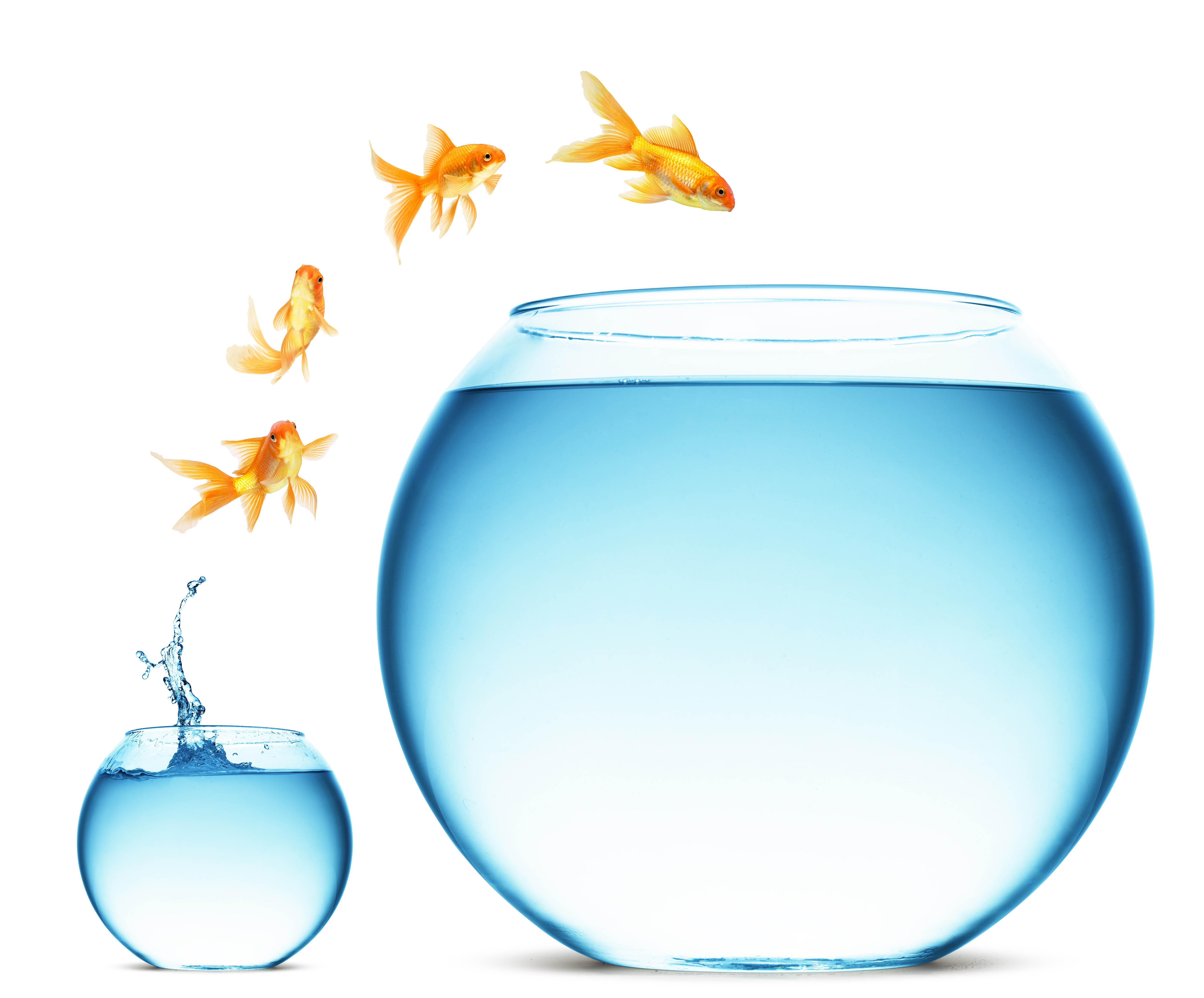 Рыбка прыгает в большой аквариум картинки