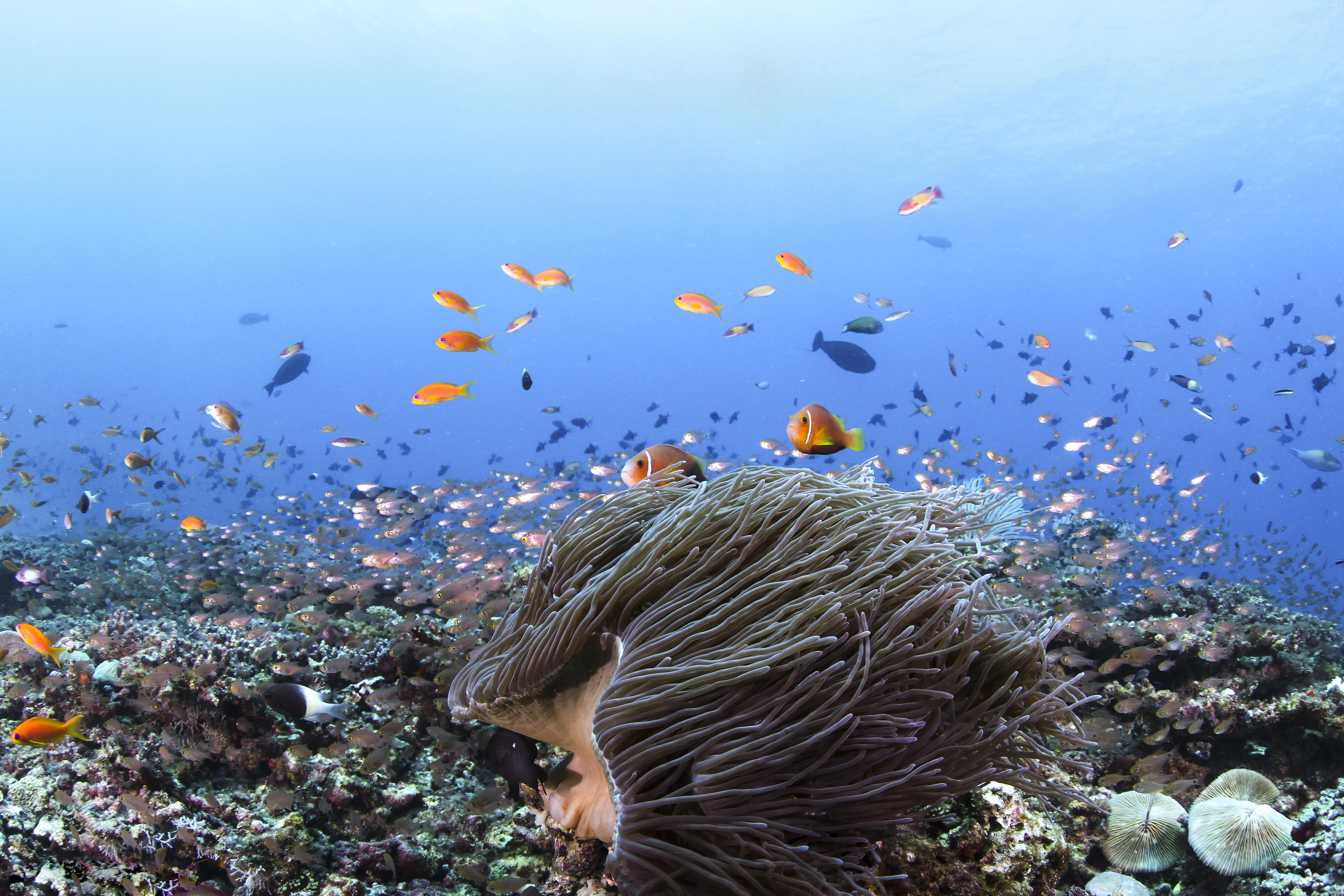 Морские картинки фото морского дна