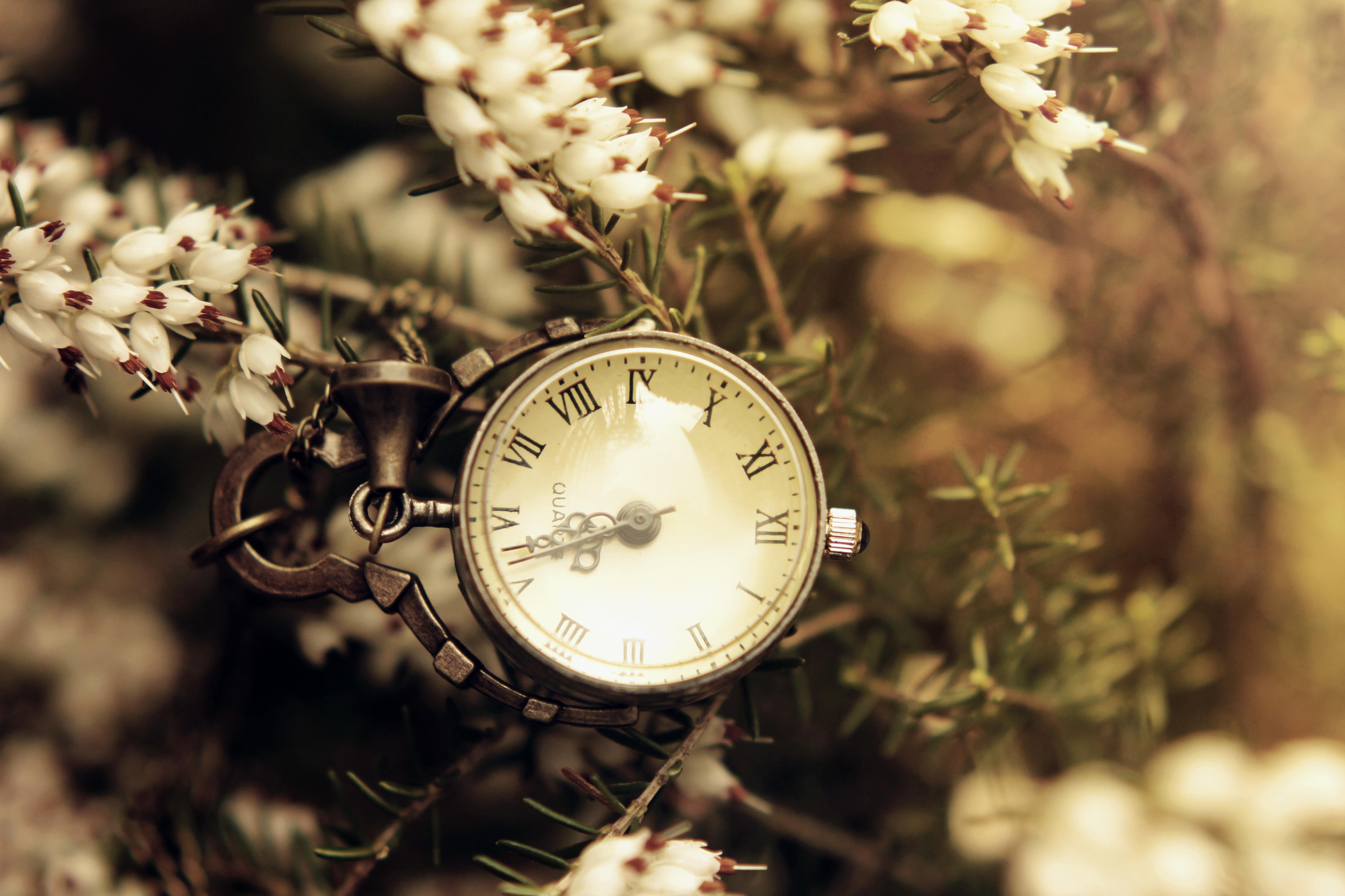 природа цветы часы  № 1520677 загрузить