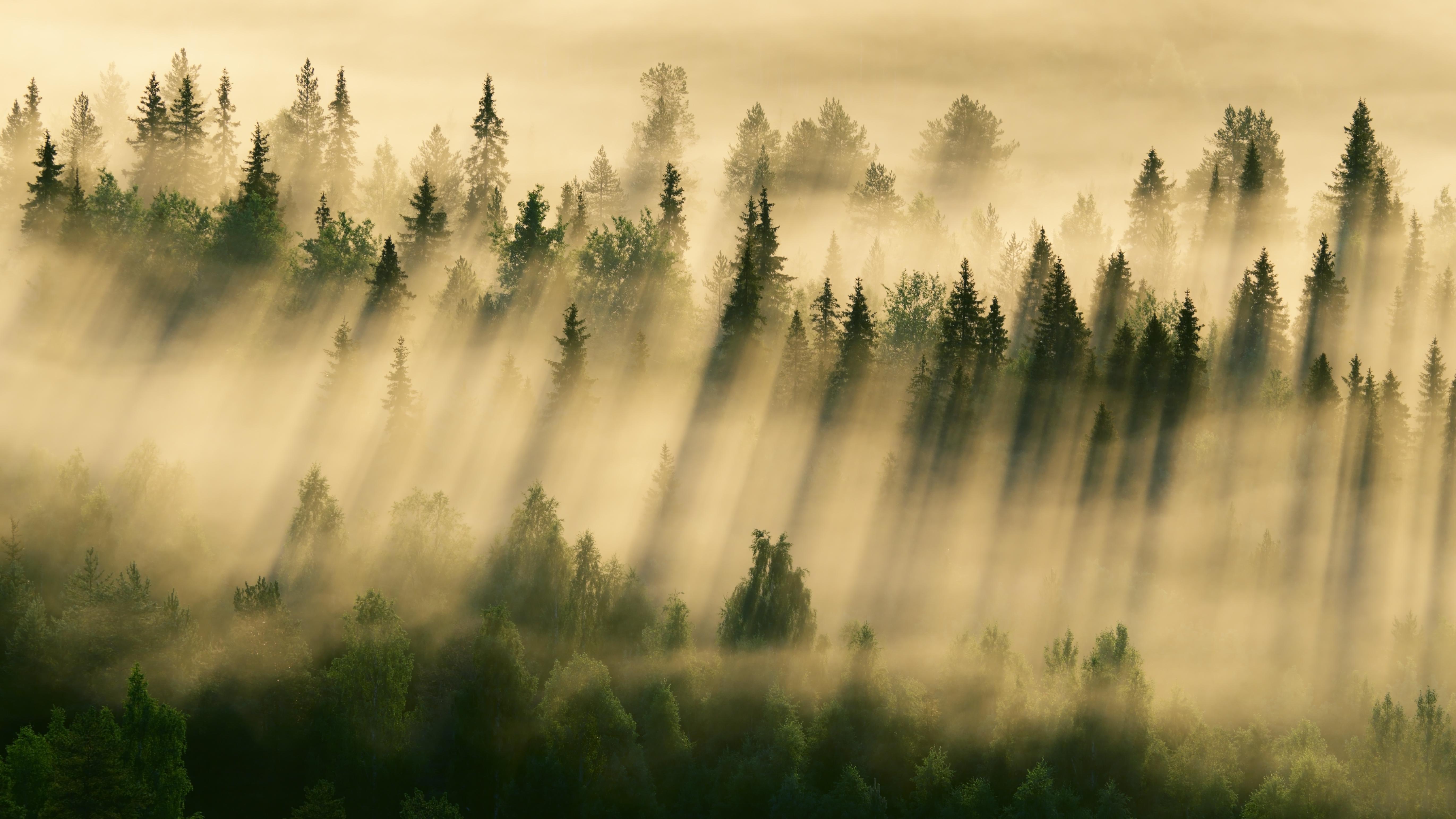Туман в лесу обои на рабочий стол