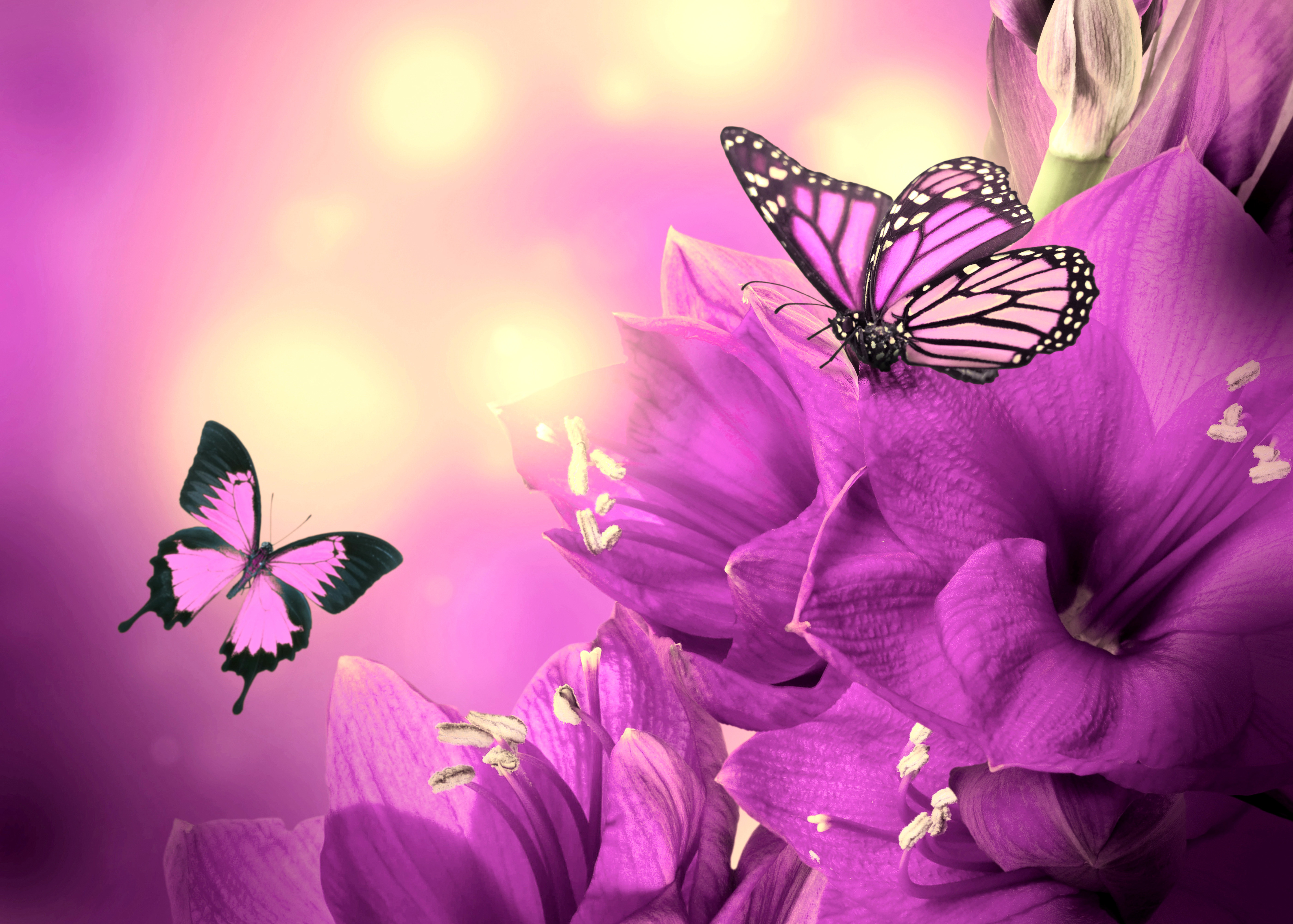 Открытка цветы бабочки