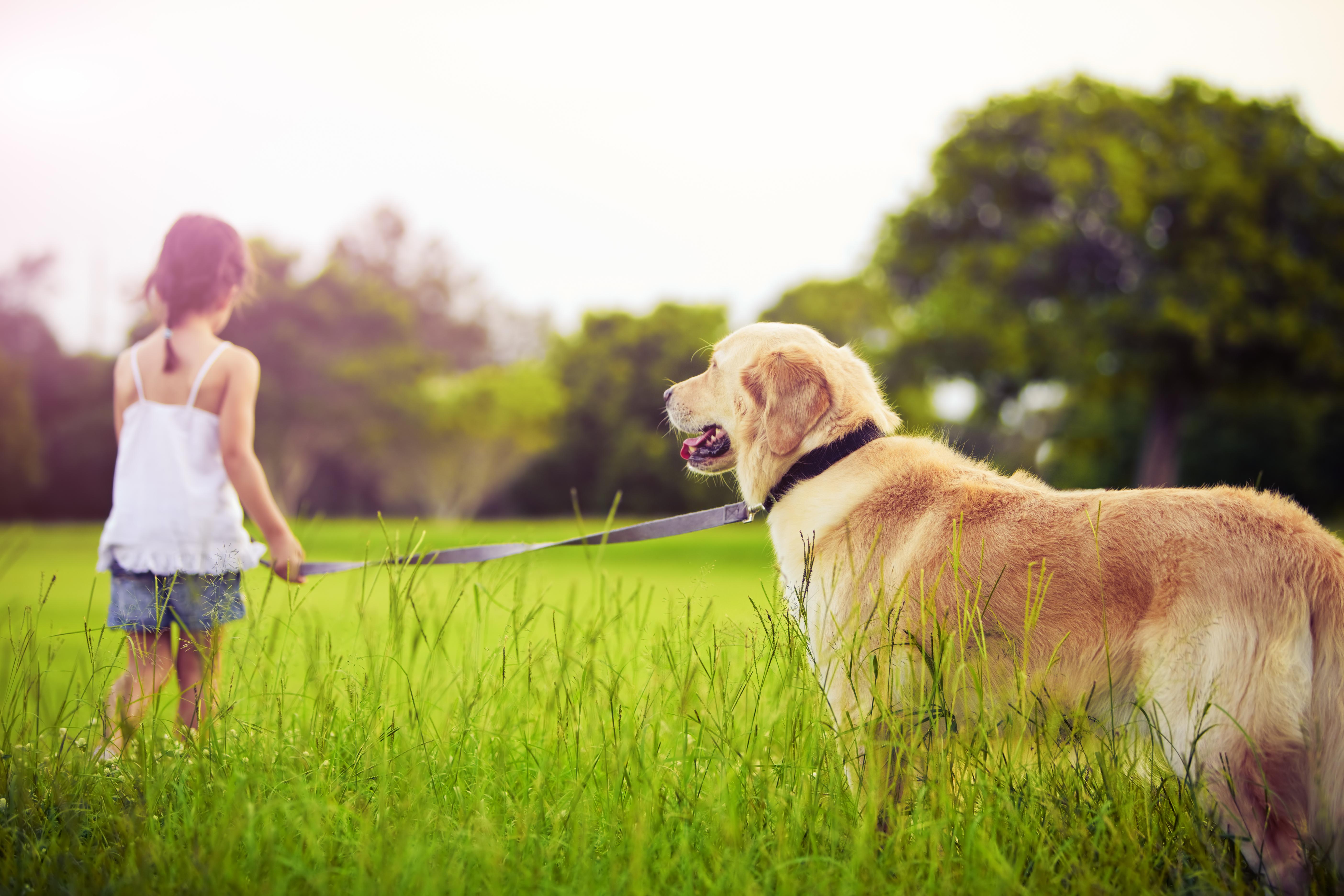 природа животные собака девочка жизнь nature animals dog girl life  № 3950986 бесплатно