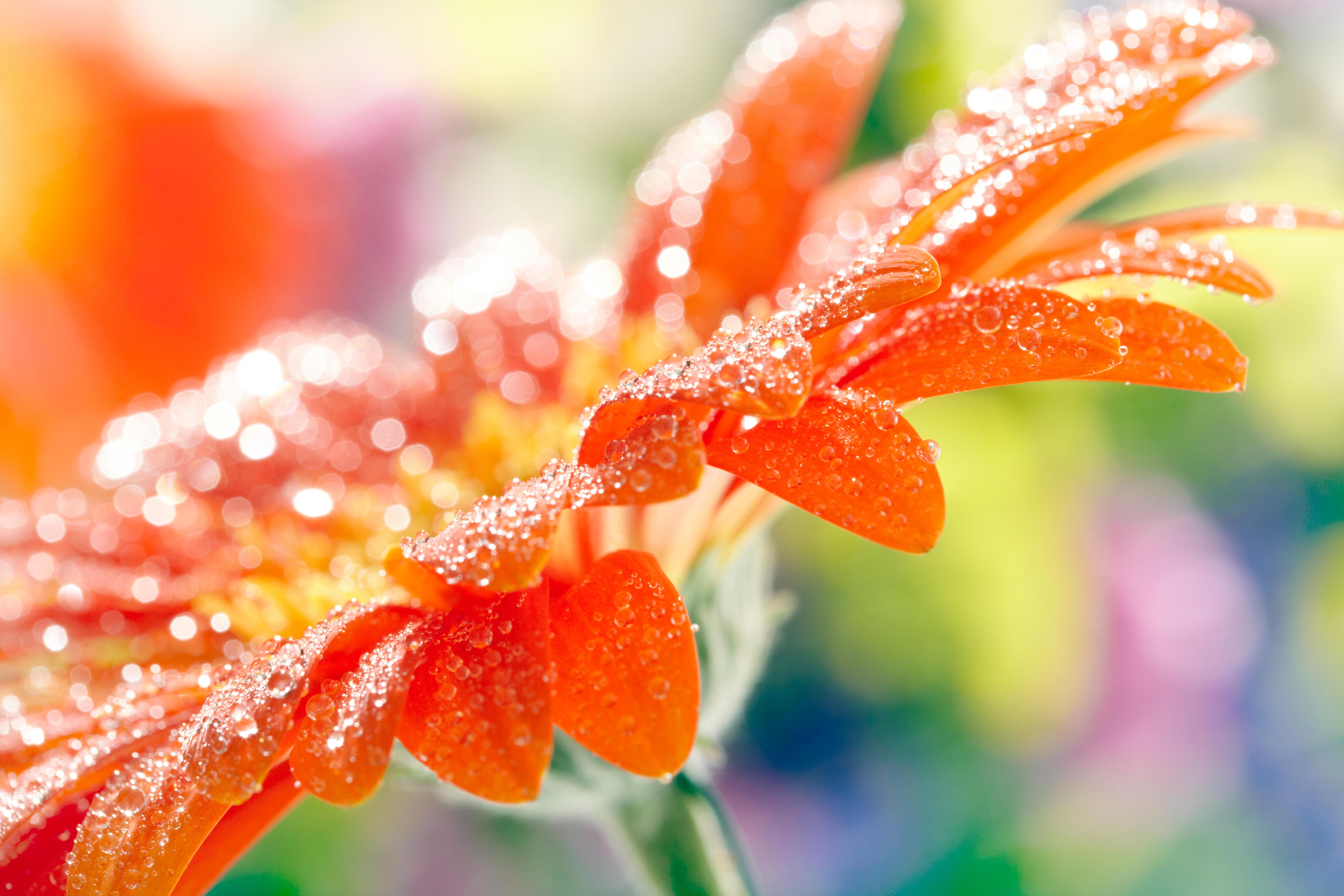 Оранжевый картинки красивые