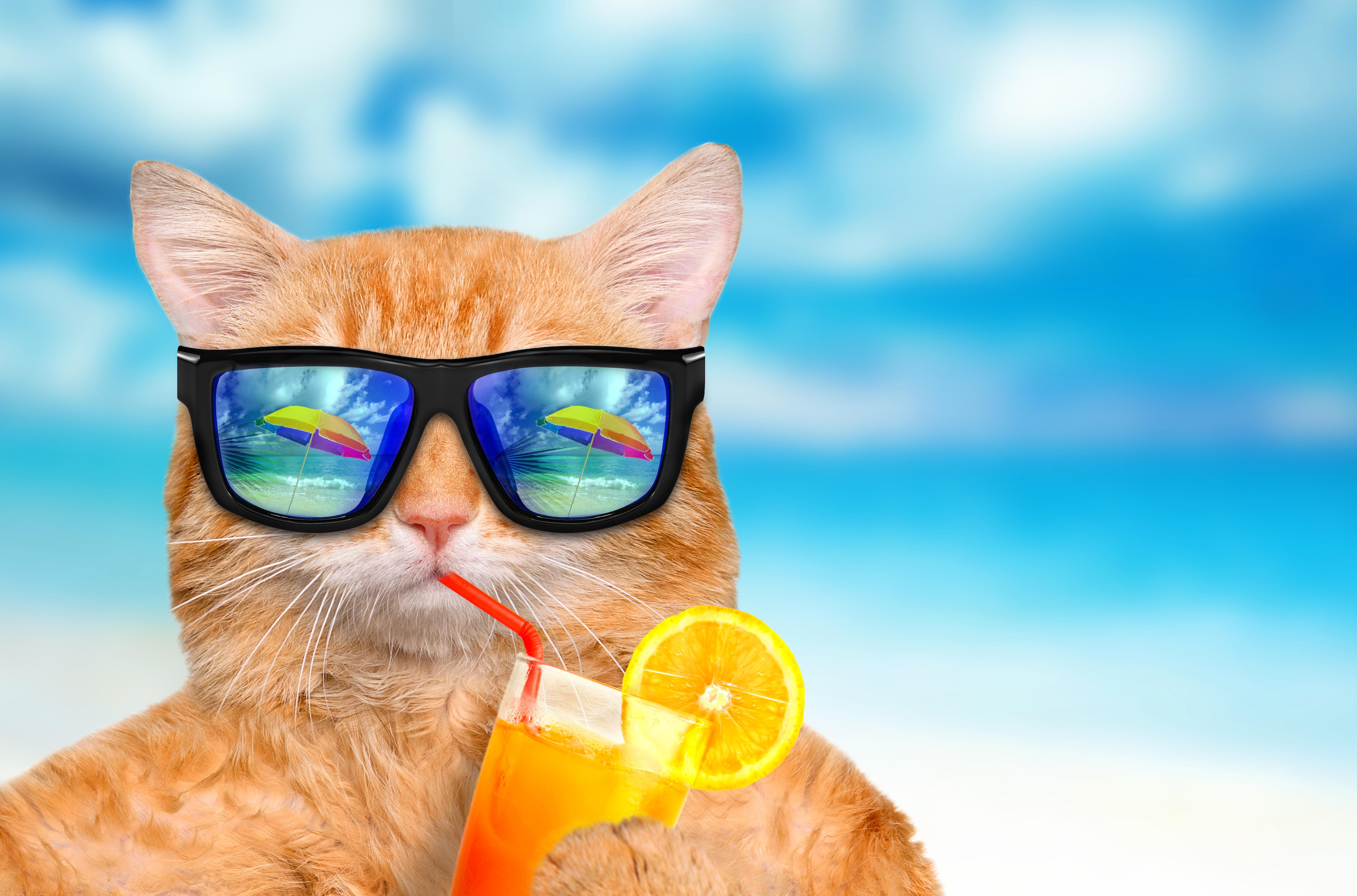 Лето море прикольная картинка, хорошего рабочего
