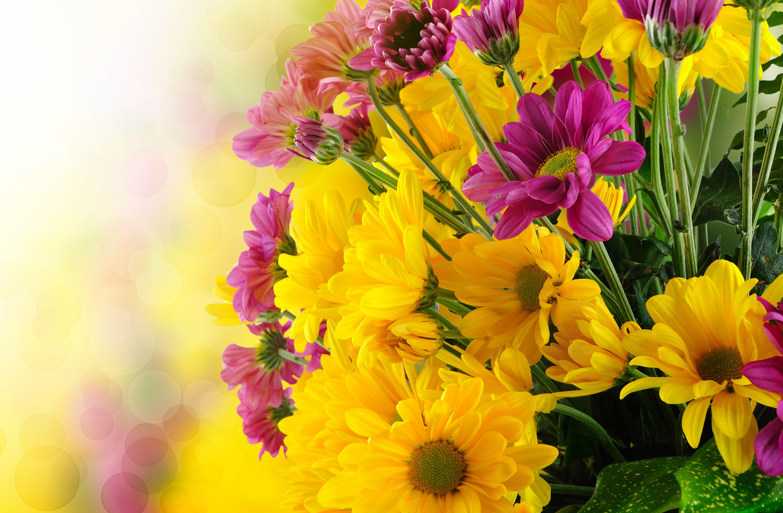 широкоформатные обои на рабочий стол высокого качества осенние цветы № 226222 без смс