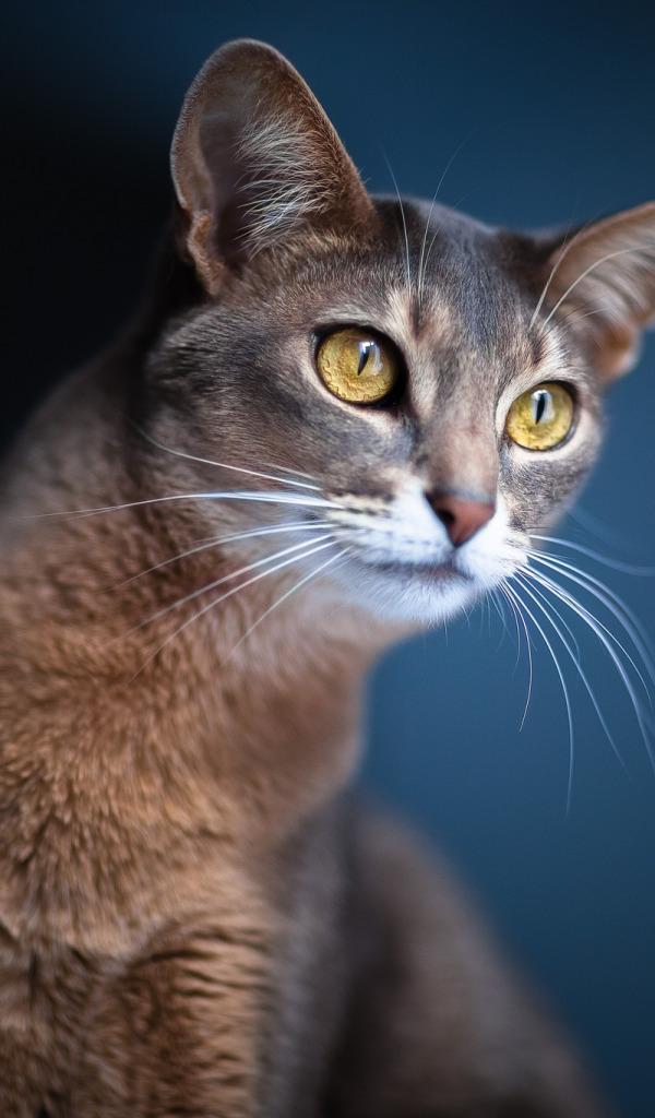 Картинка кошка фото