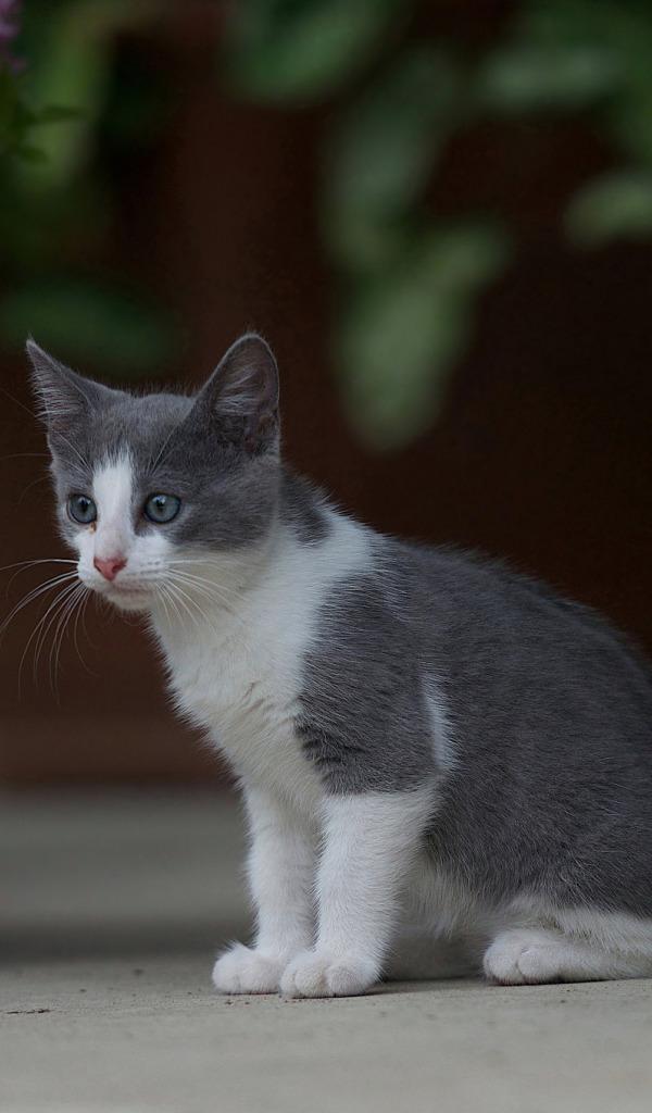 Картинка серо белых кошек