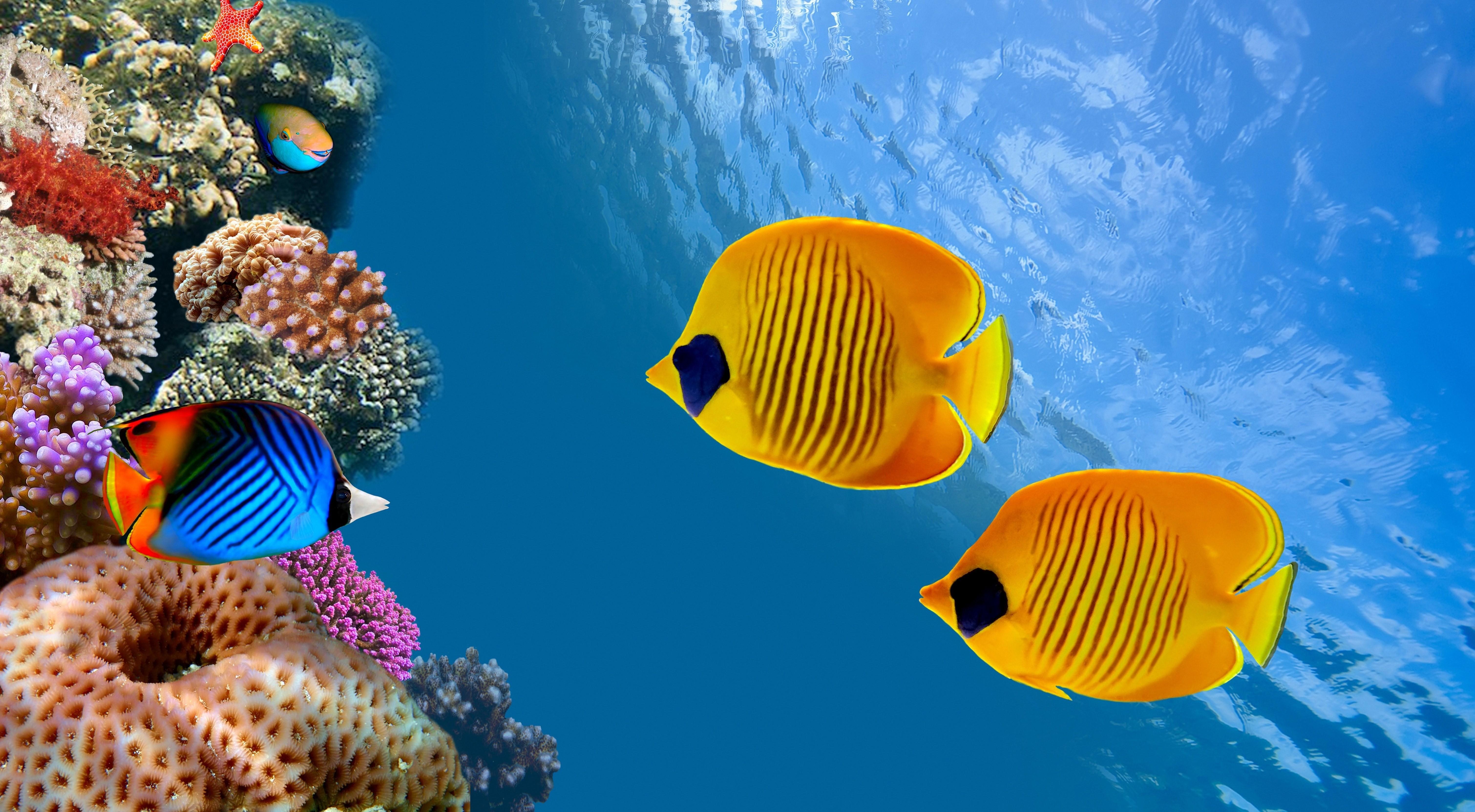 обои на рабочий стол на телефон океан мальдивы рыбки 3d № 18819 без смс