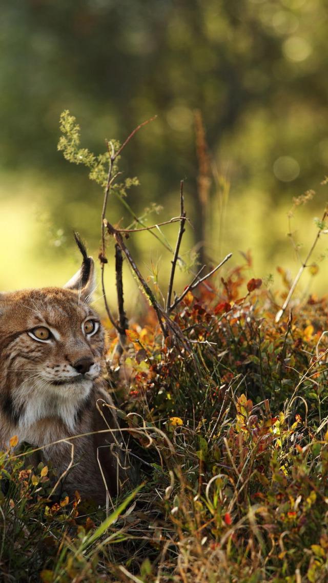 Прикольные картинки про рысь, английском любимому