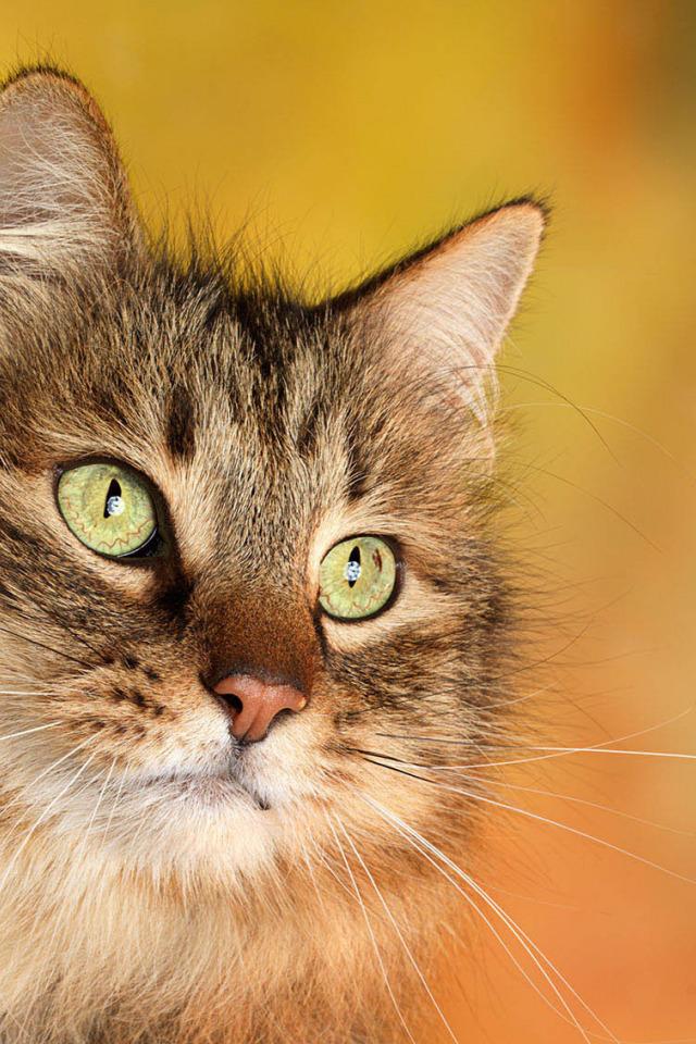 картинки кошек на телефоны любой