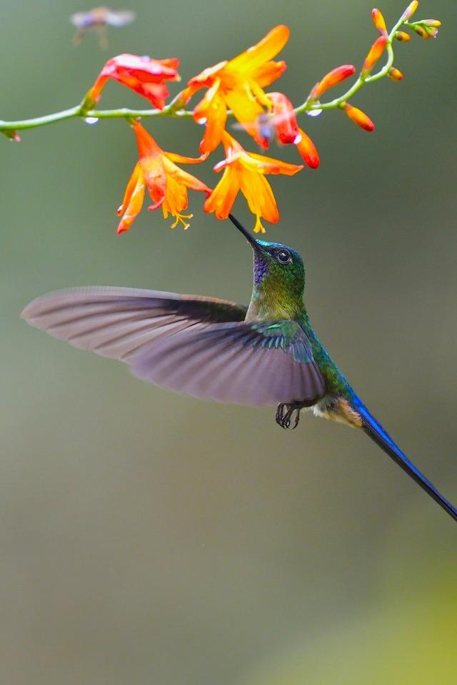 Открытка, картинка с колибри на телефон