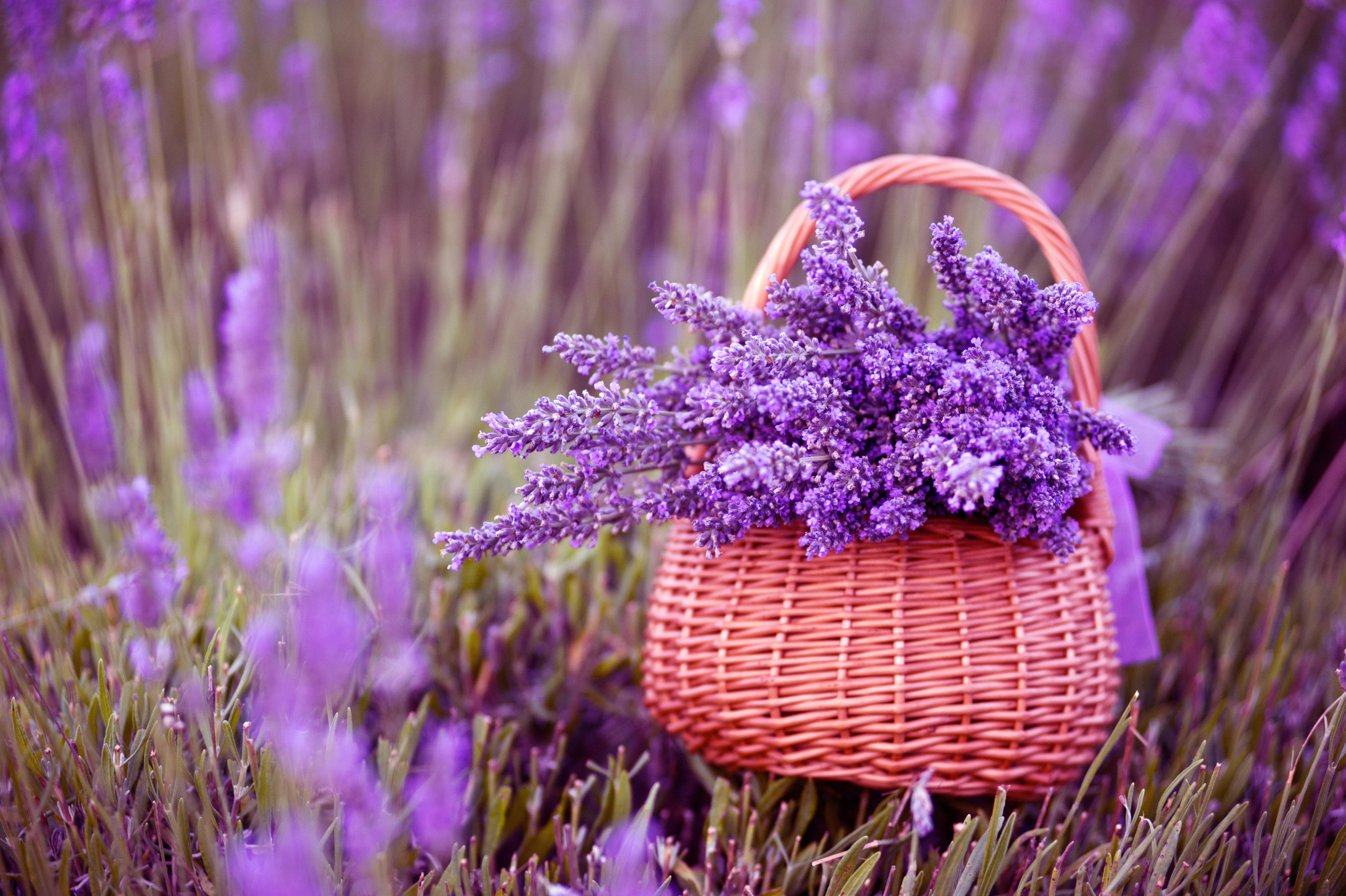 lavender background wallpaper - HD2880×1800