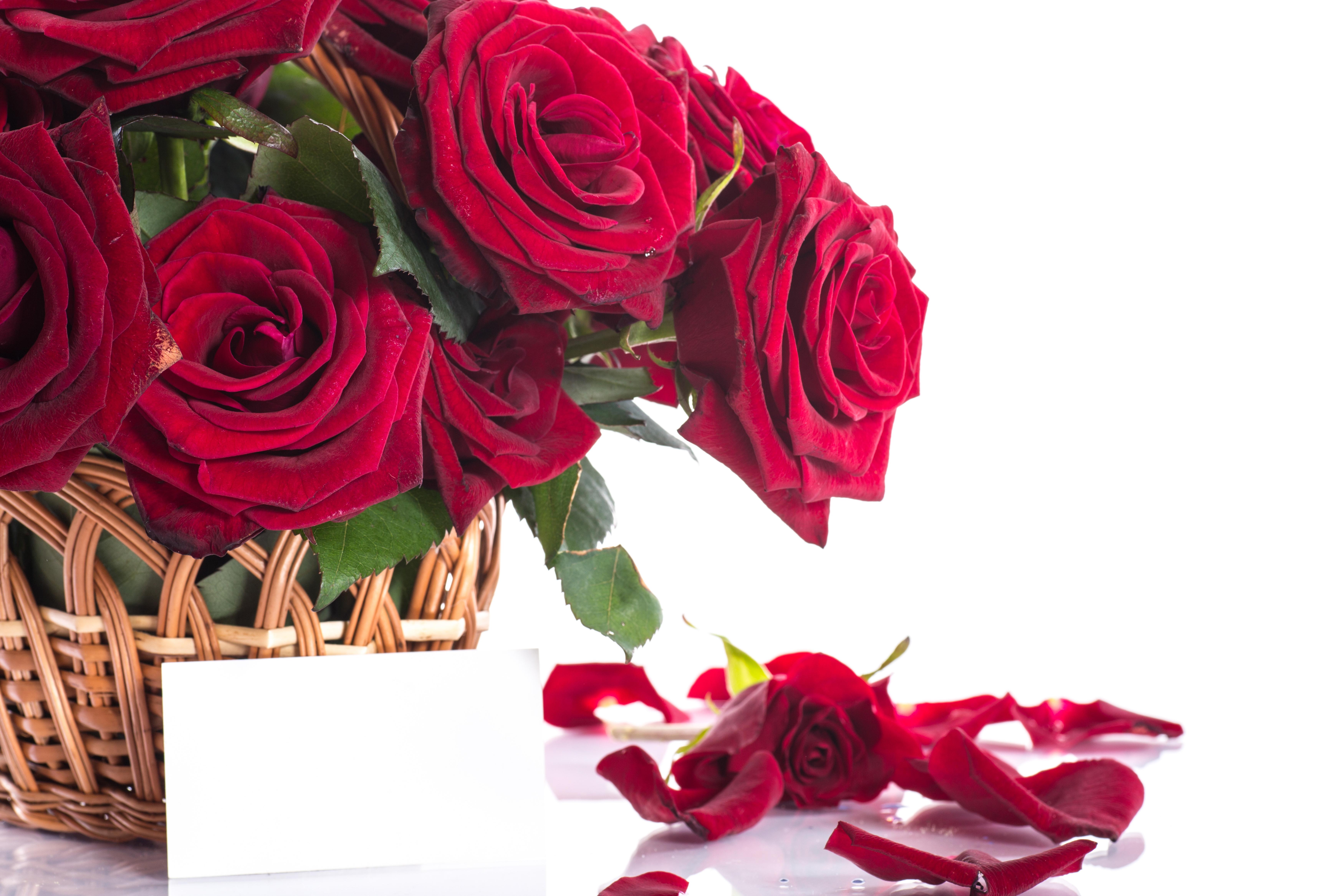 Розы красные открытки, картинки рождеством христовым