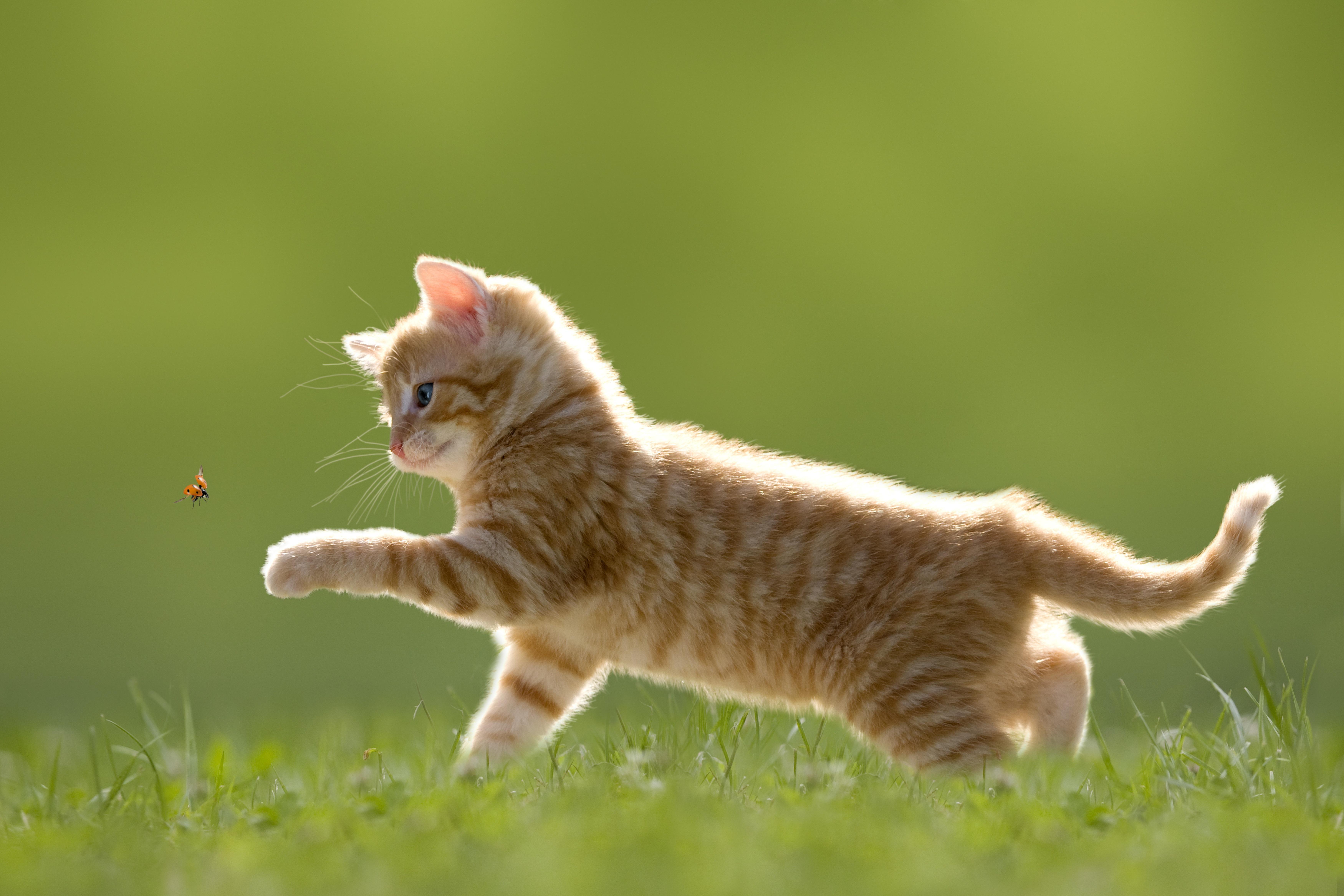 Котенок играющий с кошкой в траве  № 1994894 загрузить