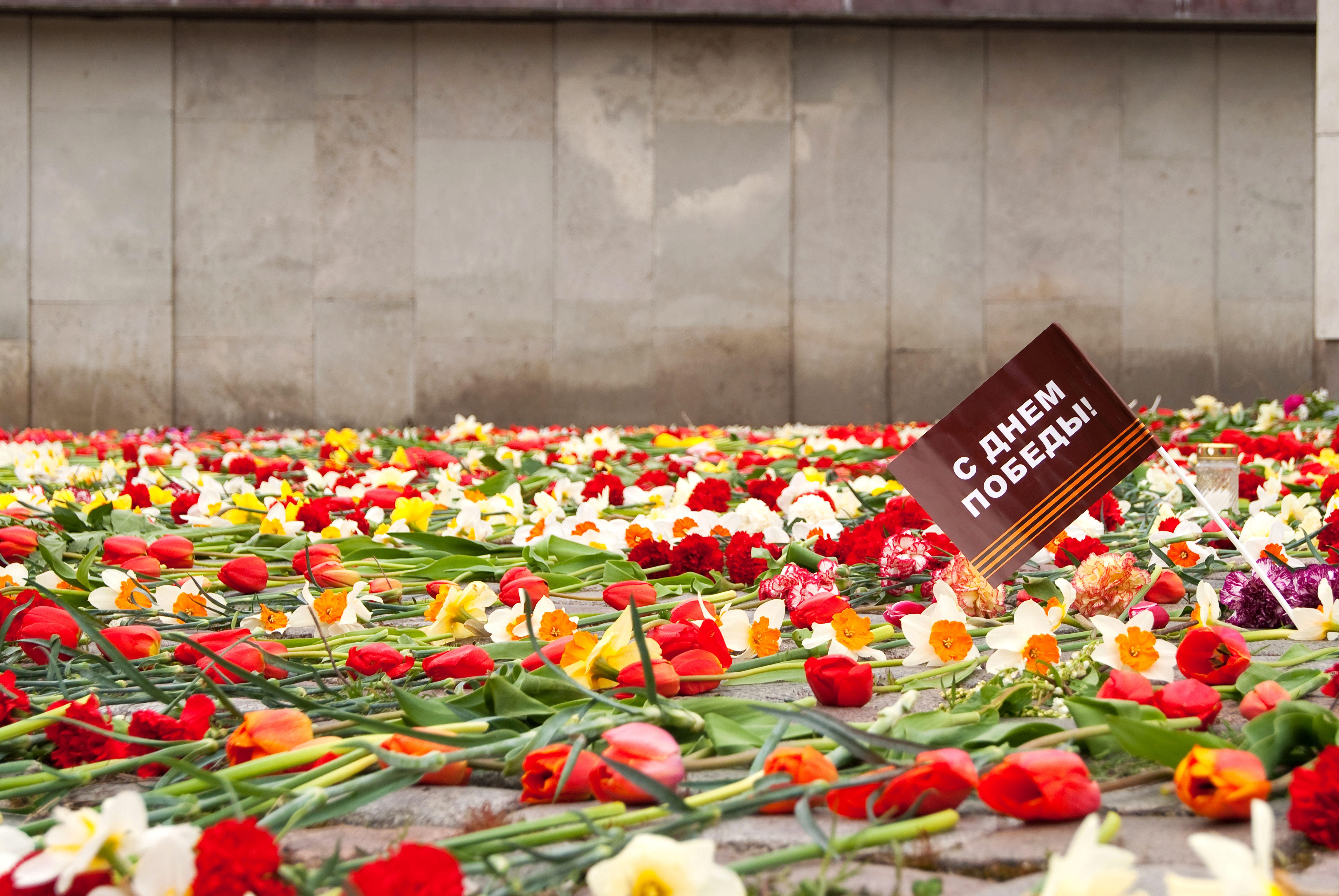 Цветок войны картинки